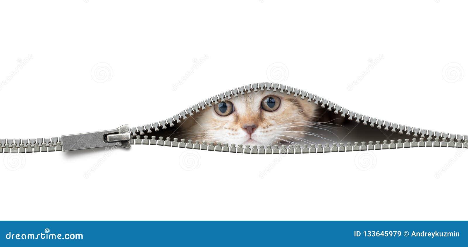 Katten i öppet blixtlåshål isolerade