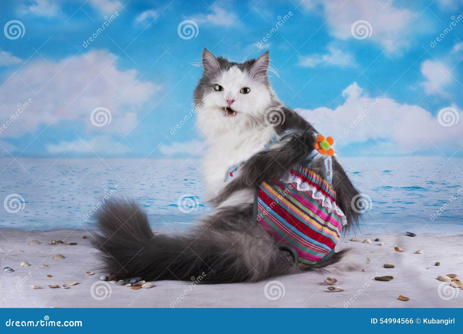 Katten i en baddräkt solbadar på stranden