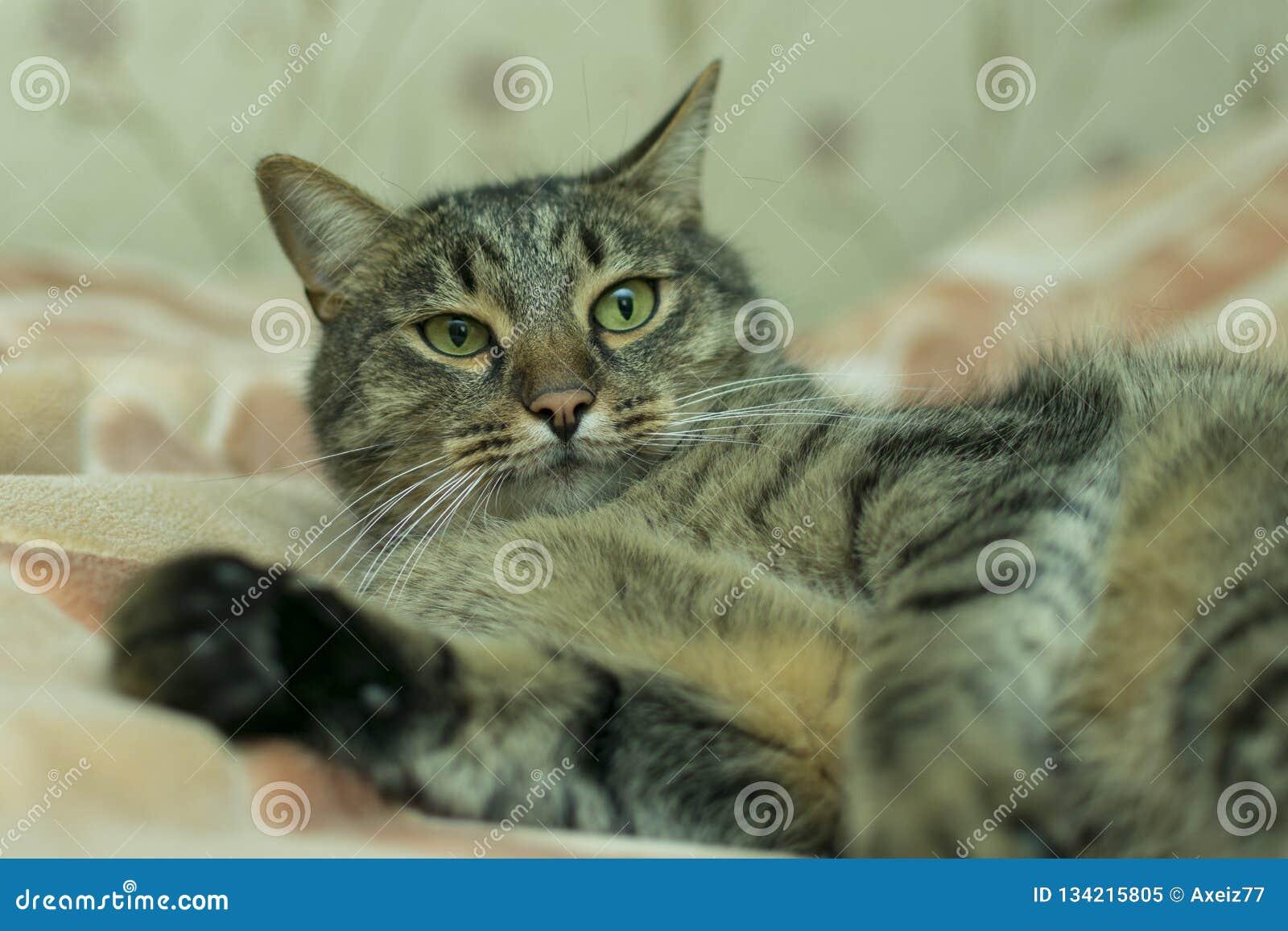 Katten ligger på plädet av sängen