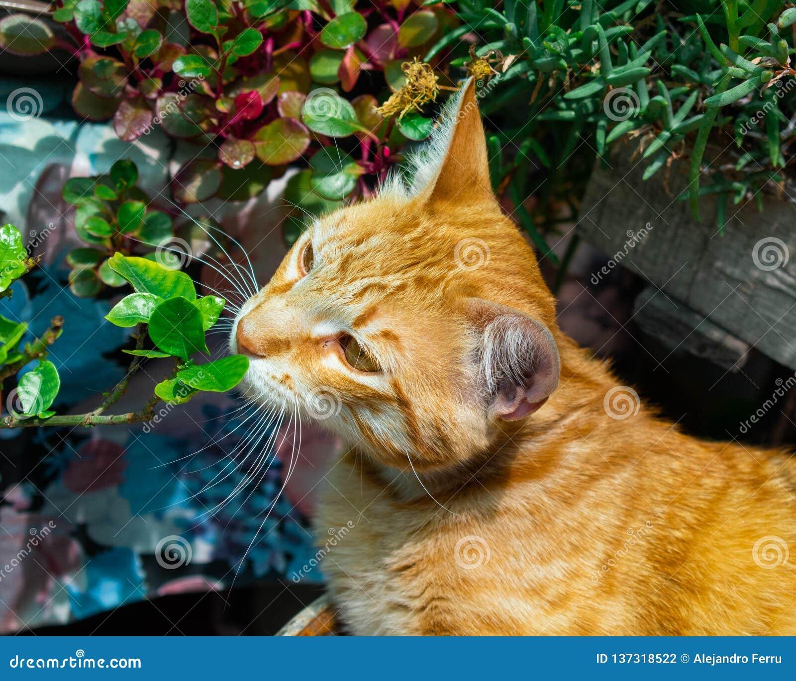 Katten luktar grönt