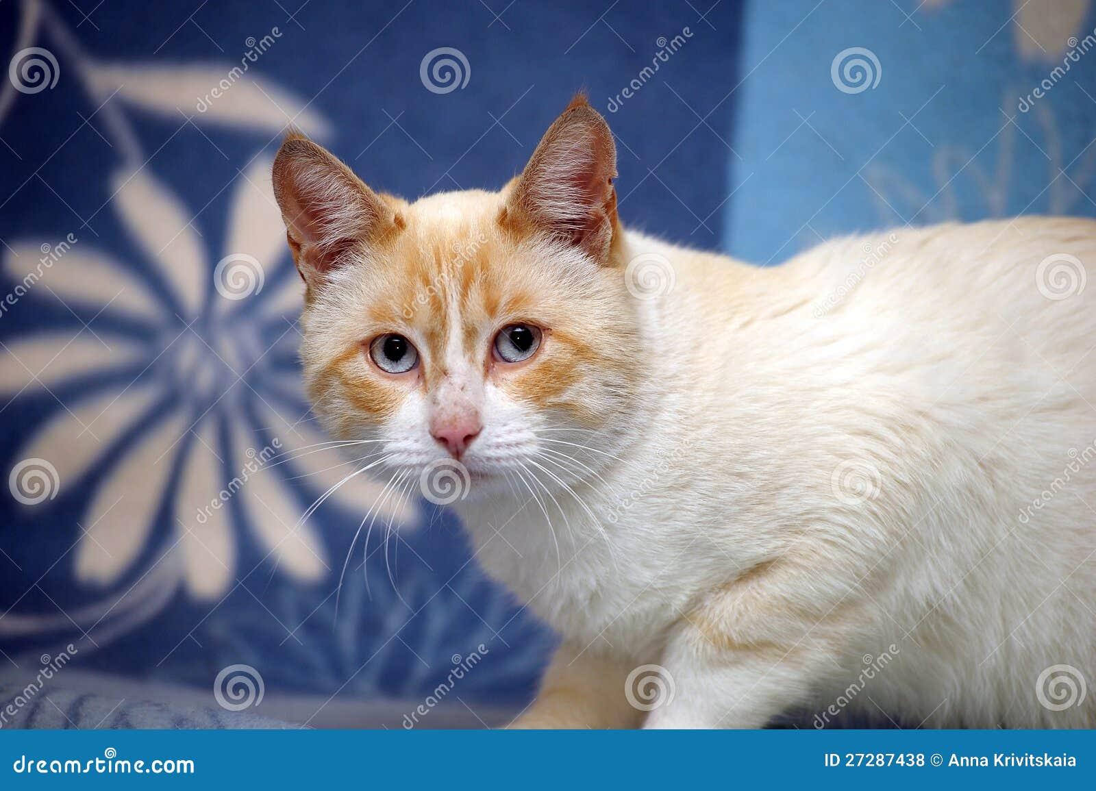 Katten med blått synar