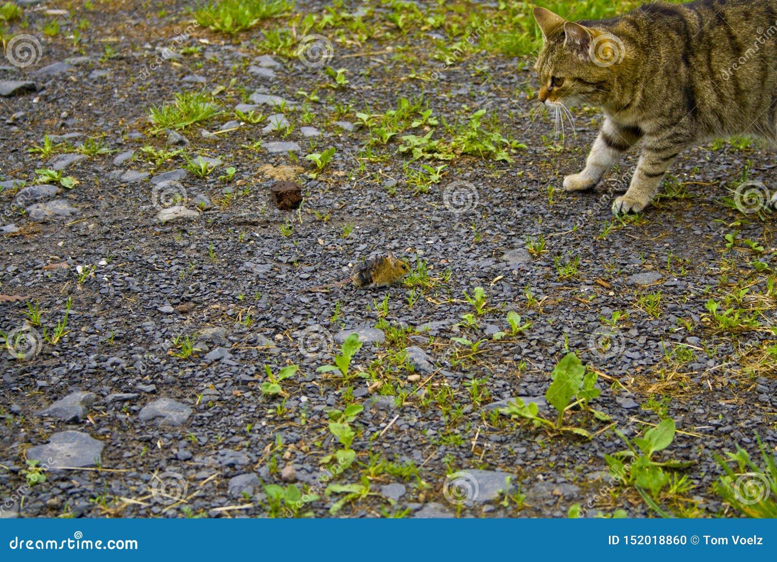Katten och musen håller sig ögonen på
