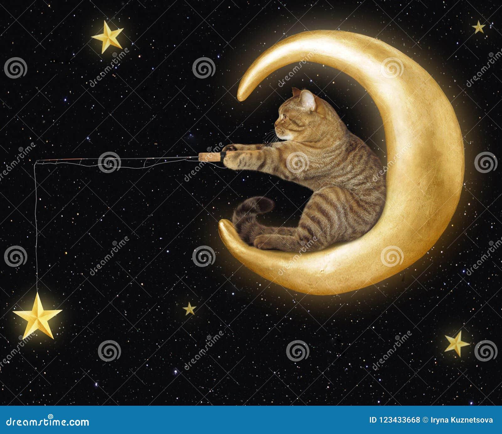 Katten på månen fångar stjärnor