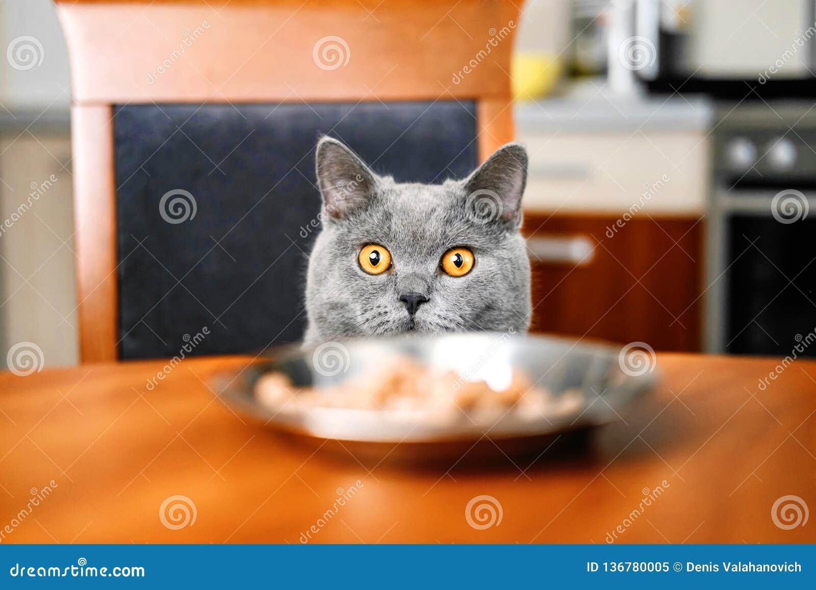 Katten ser mat på tabellen