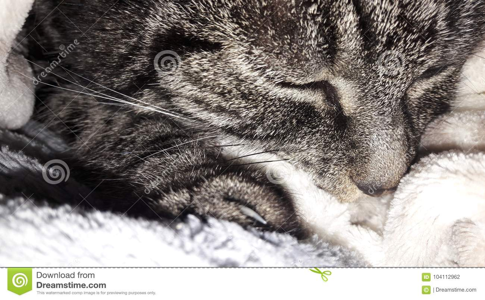 Katten smyga sig i ull