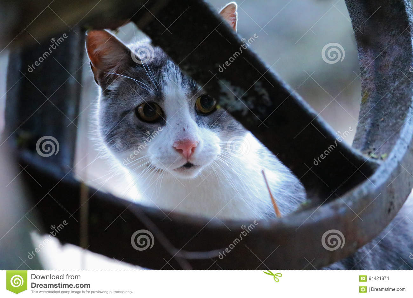 Katten synar