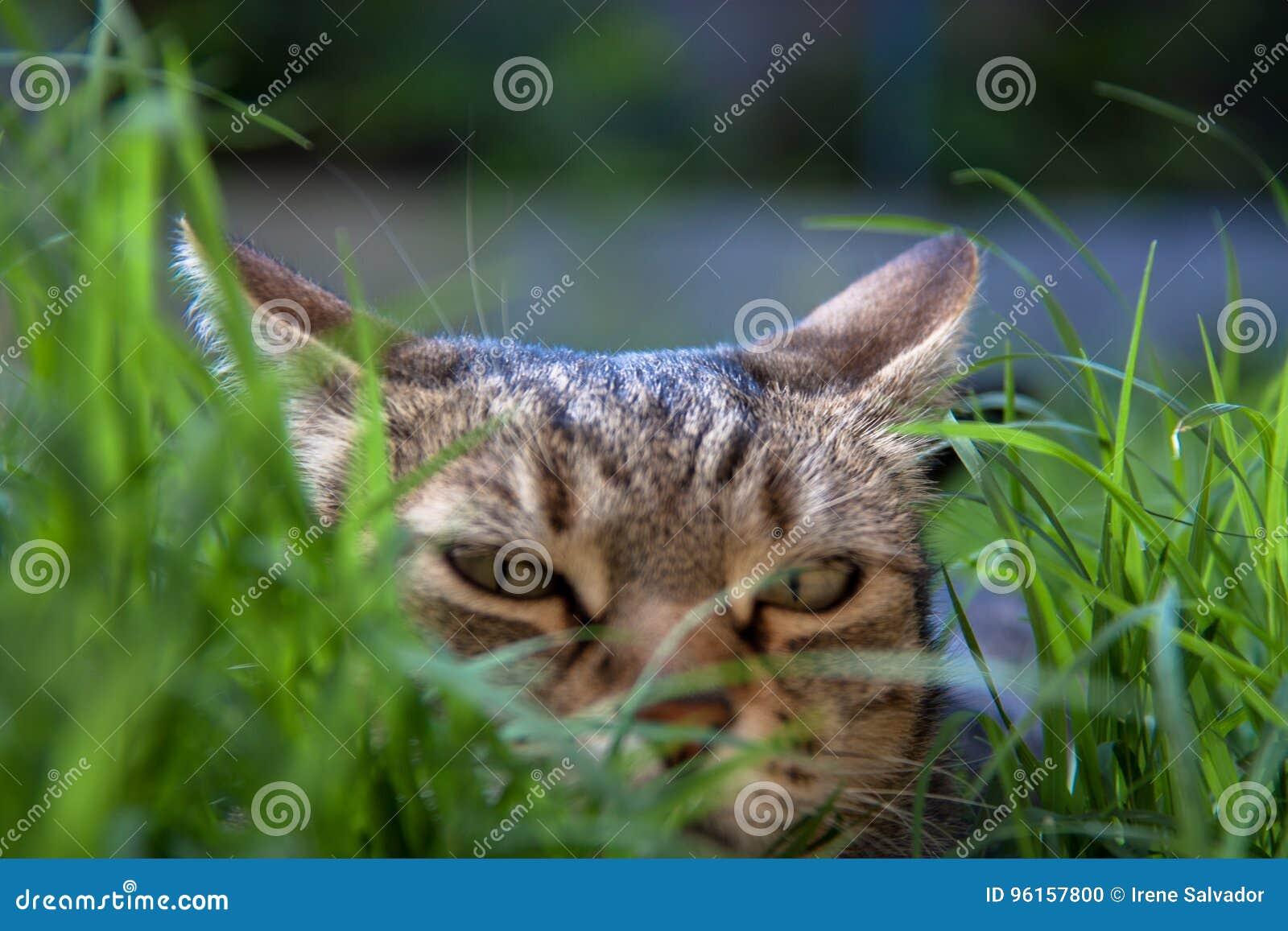 Kattenhinderlaag tussen gras