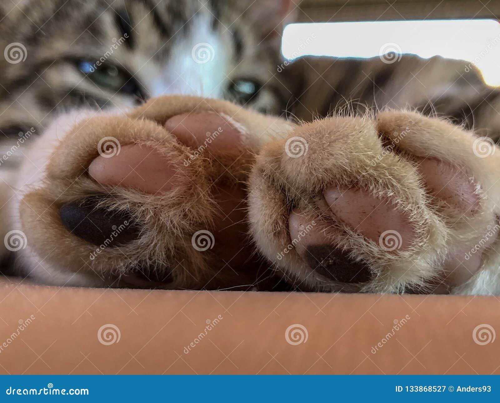 Kattenpoten