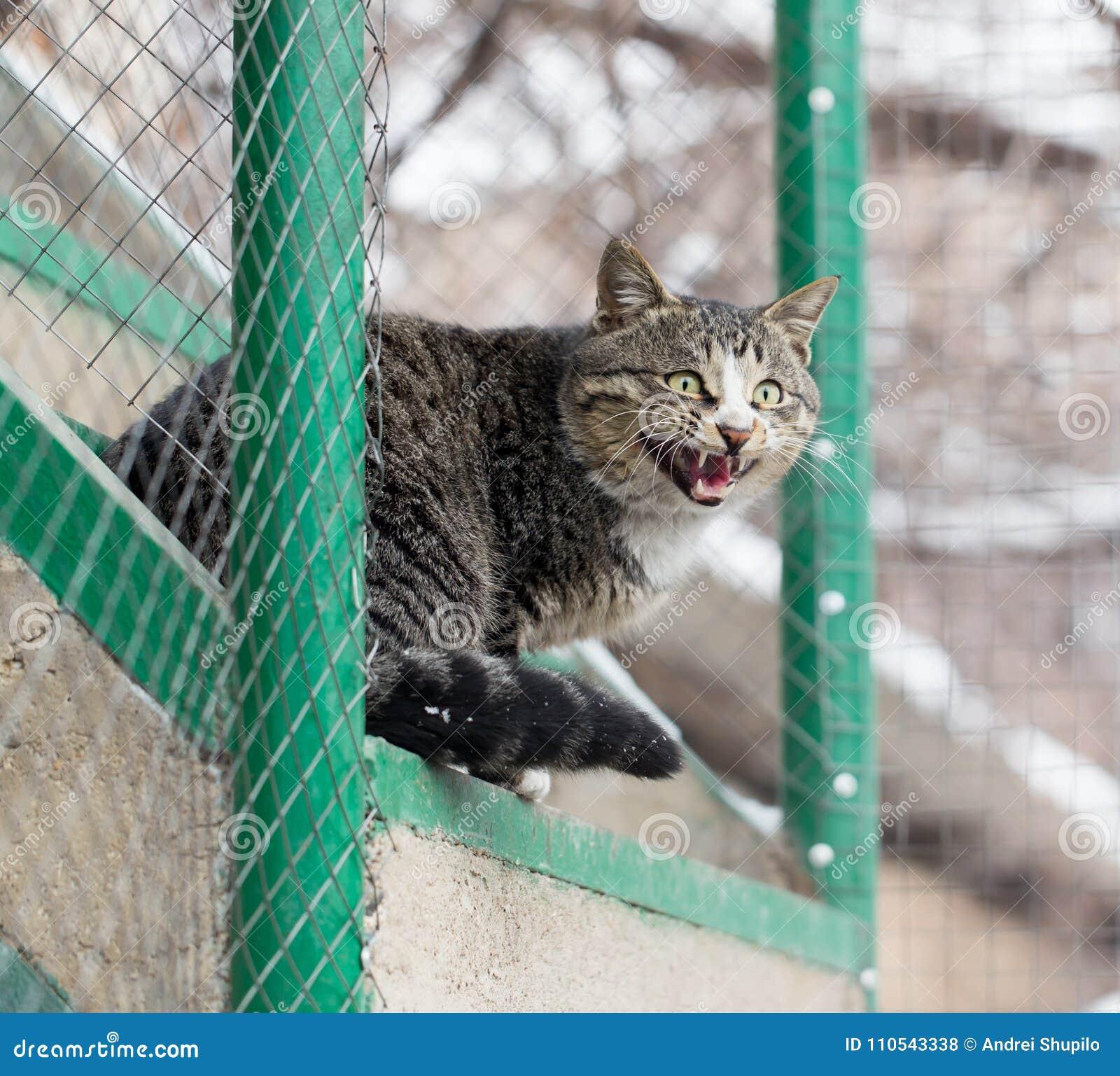 Kattenzitting op een portiek