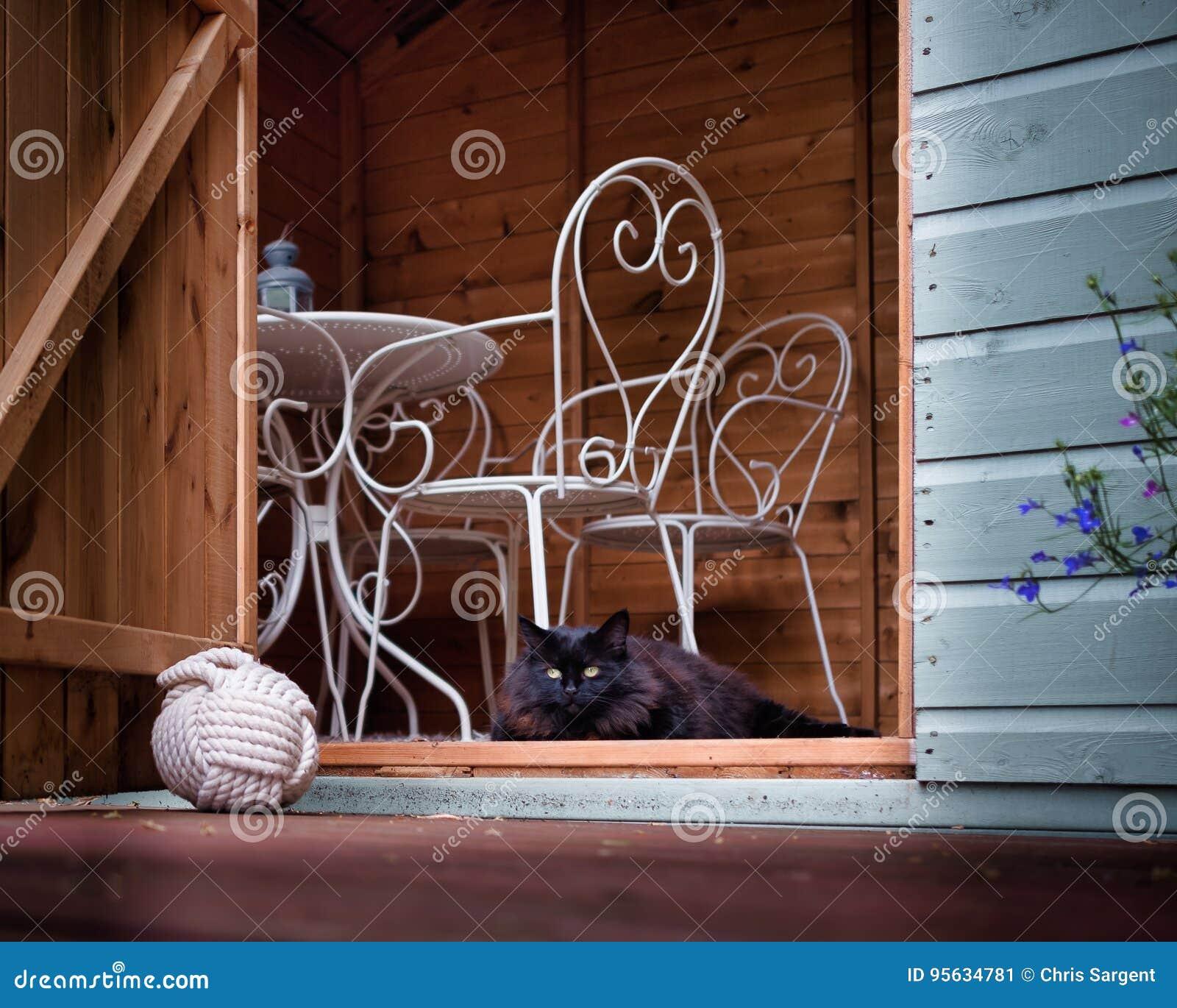 Kattenzitting in Summerhouse