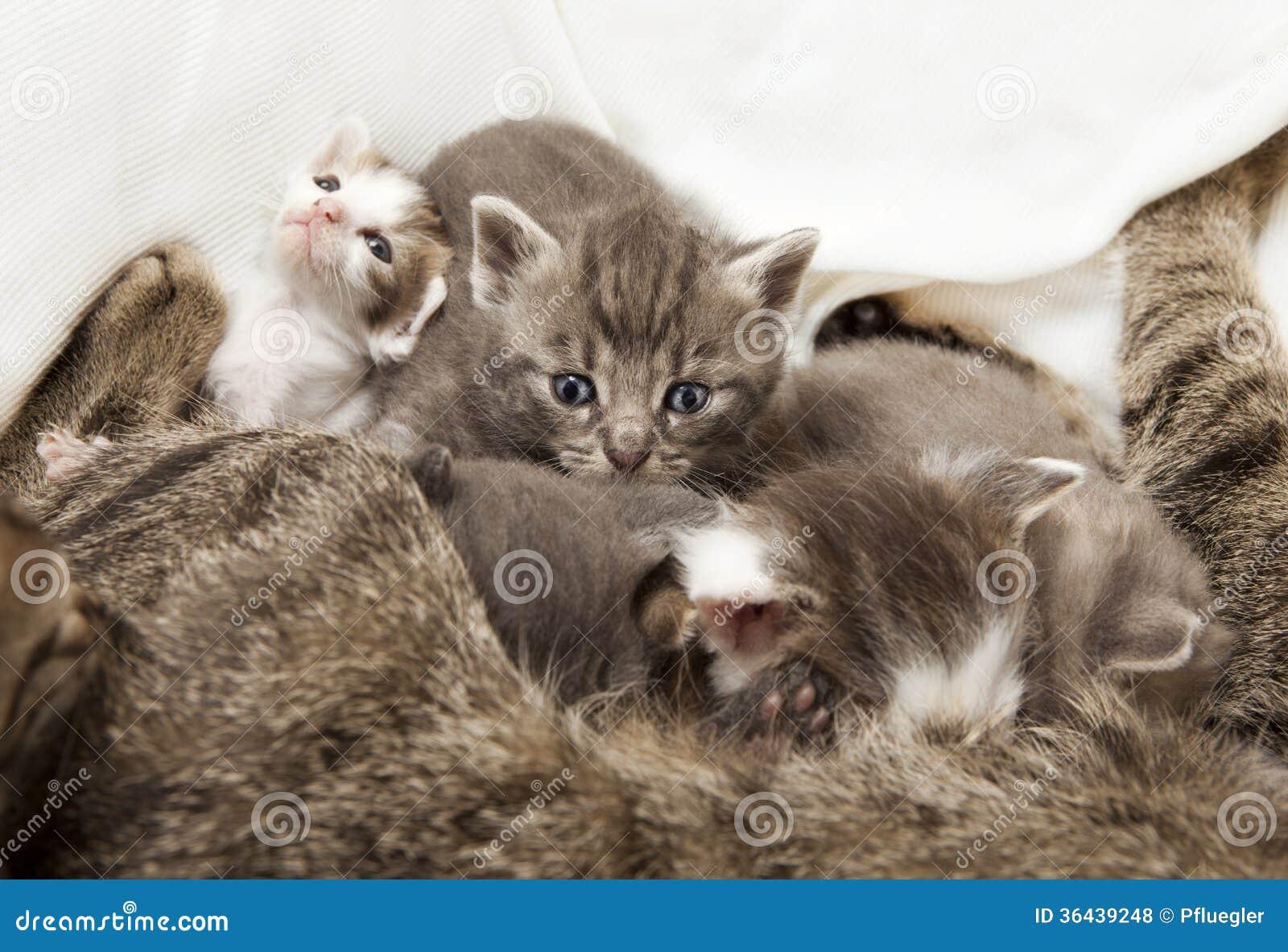 Katter behandla som ett barn diat