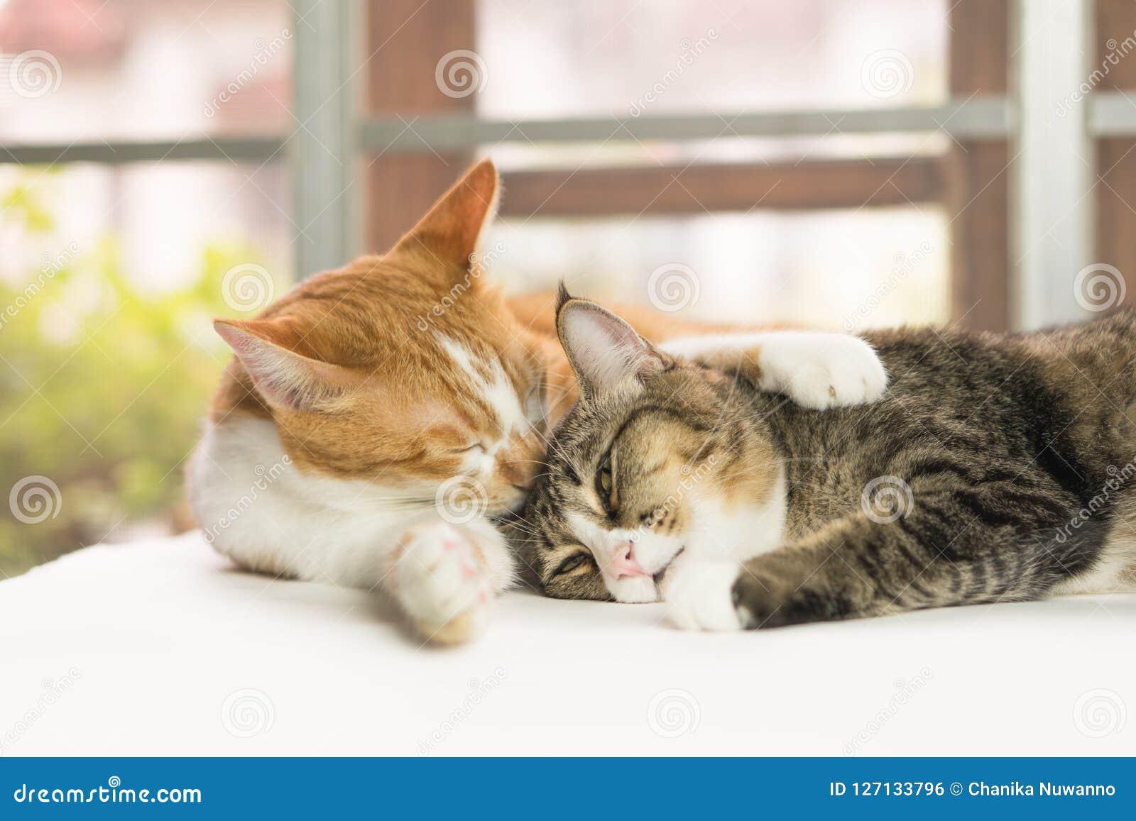 Katter gör ren kroppen varje dag