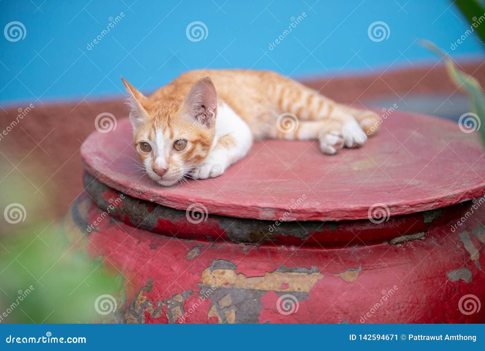Katter på kruset