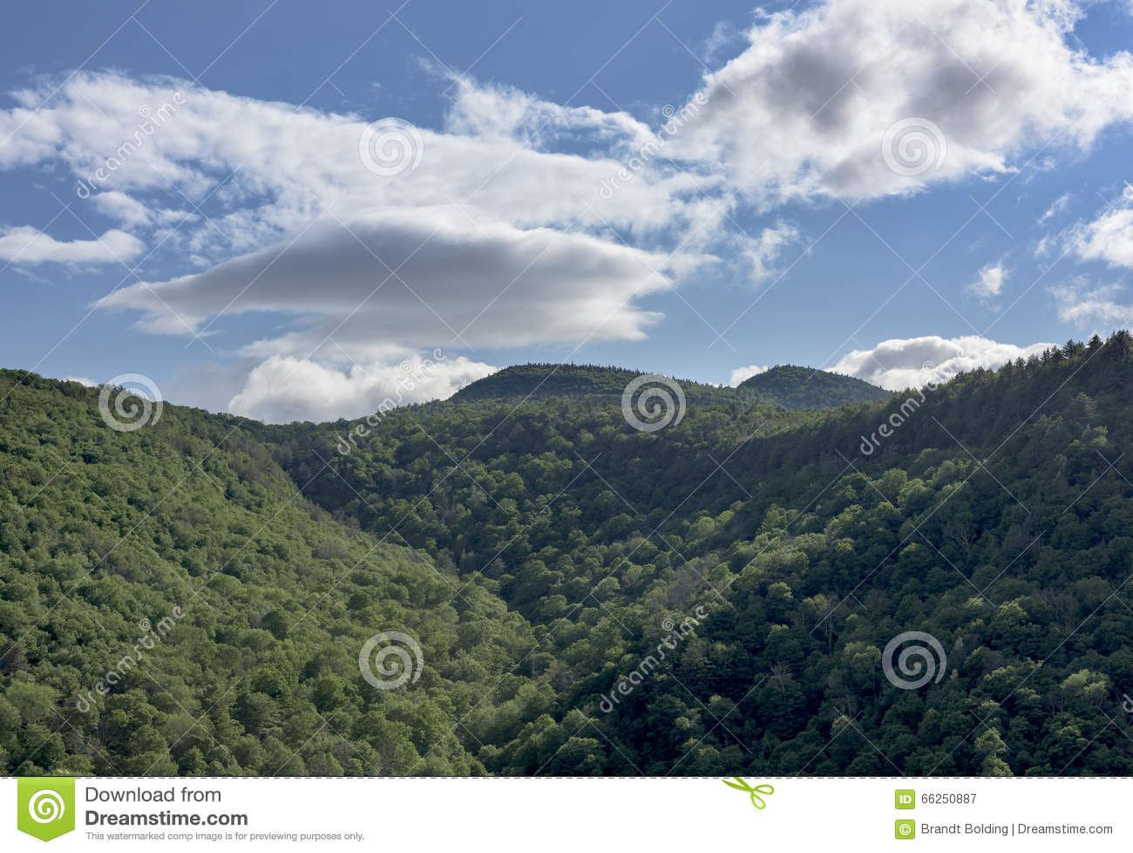 Katterskill kryddnejlika och berg av New York