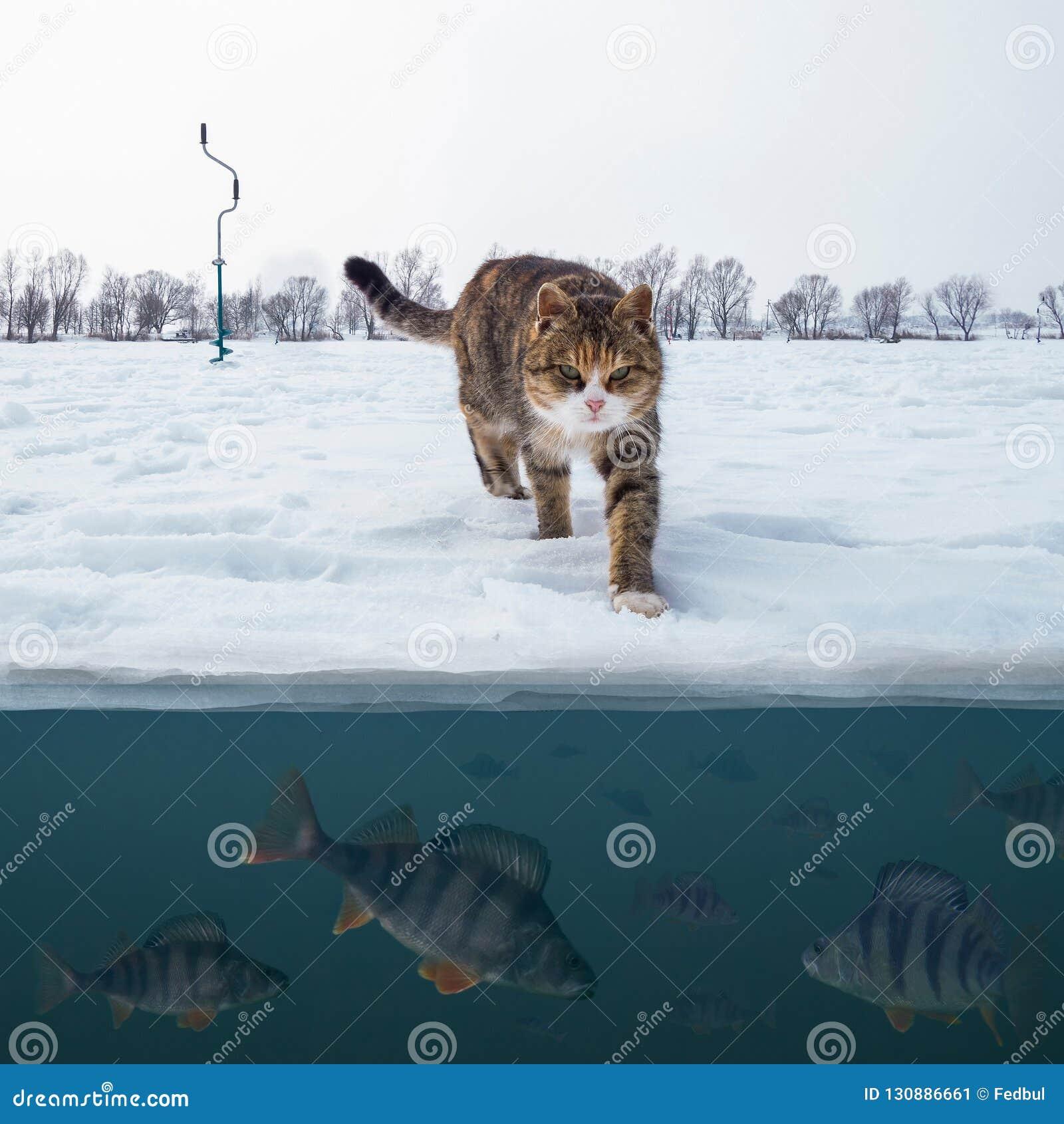 Kattfiskare på snöig is på sjön ovanför soldaten av sittpinnefisken Bakgrund för vinterisfiske