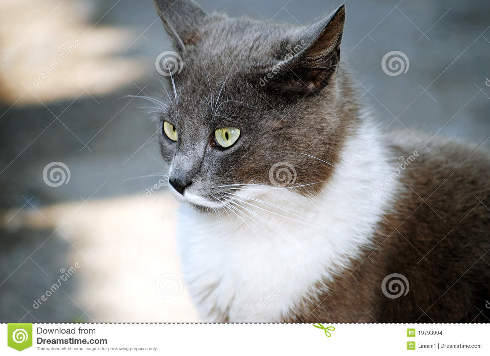 Kattgray går