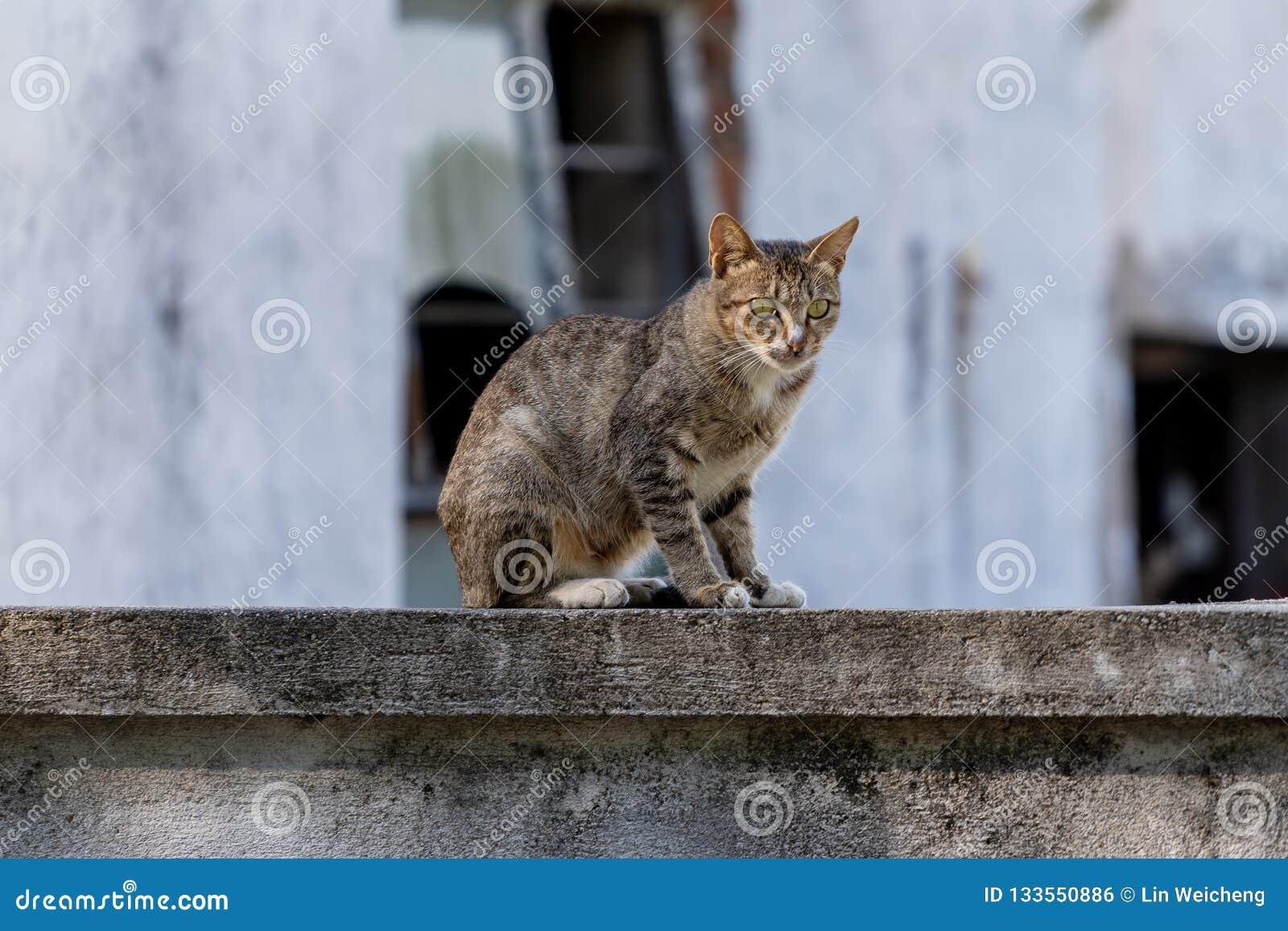 Kattsammanträde på ett staket