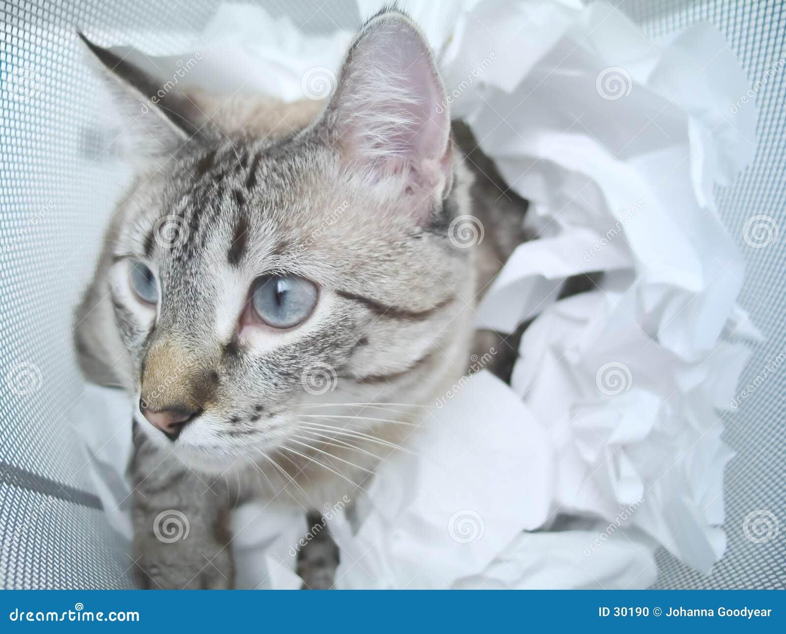 Kattspelrum