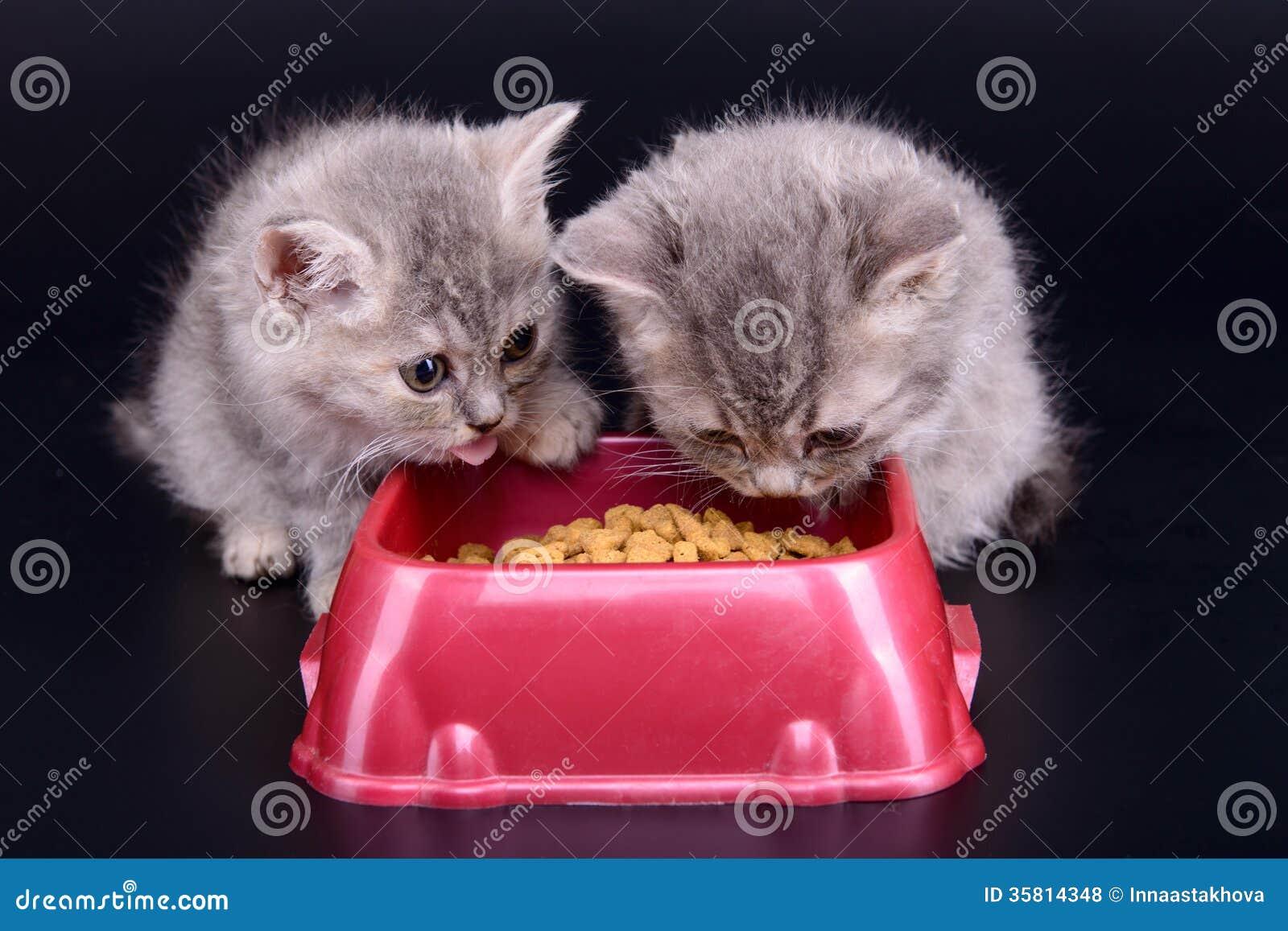 mat för kattungar