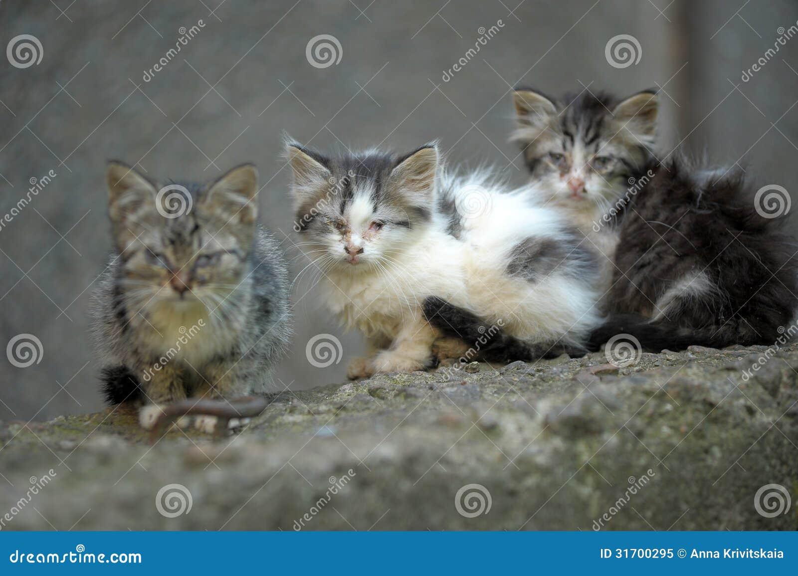 Kattunge för hemlös tre