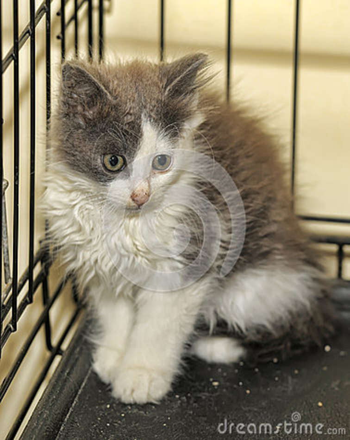 Kattunge i en bur på skyddet
