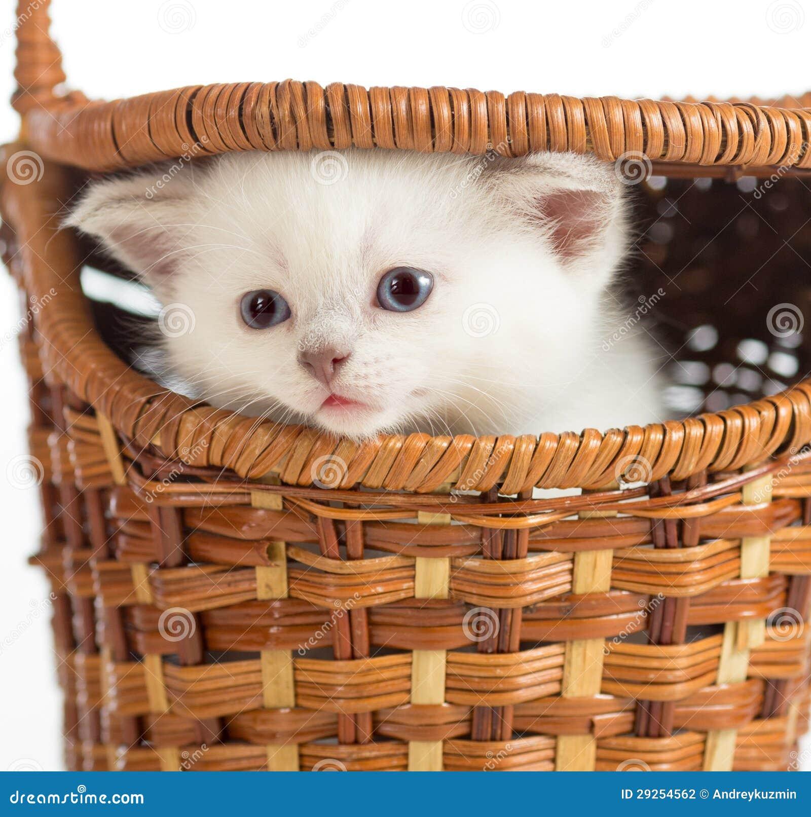 Kattunge i korg