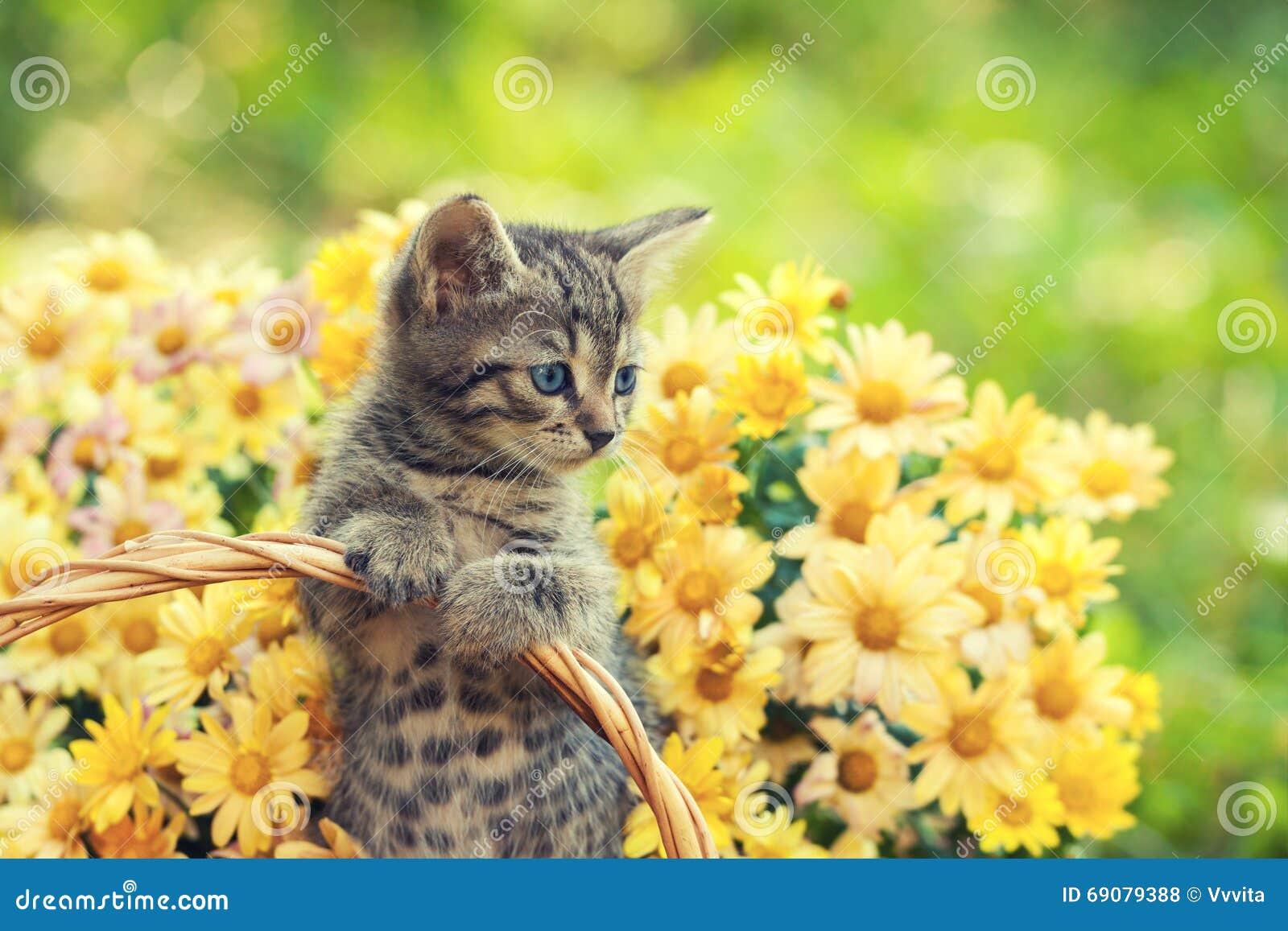 Kattunge i trädgården med blommor