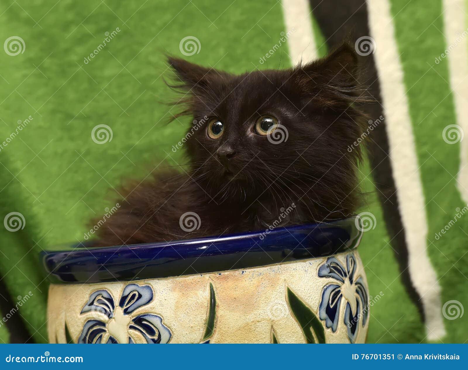 Kattunge och en blomkruka