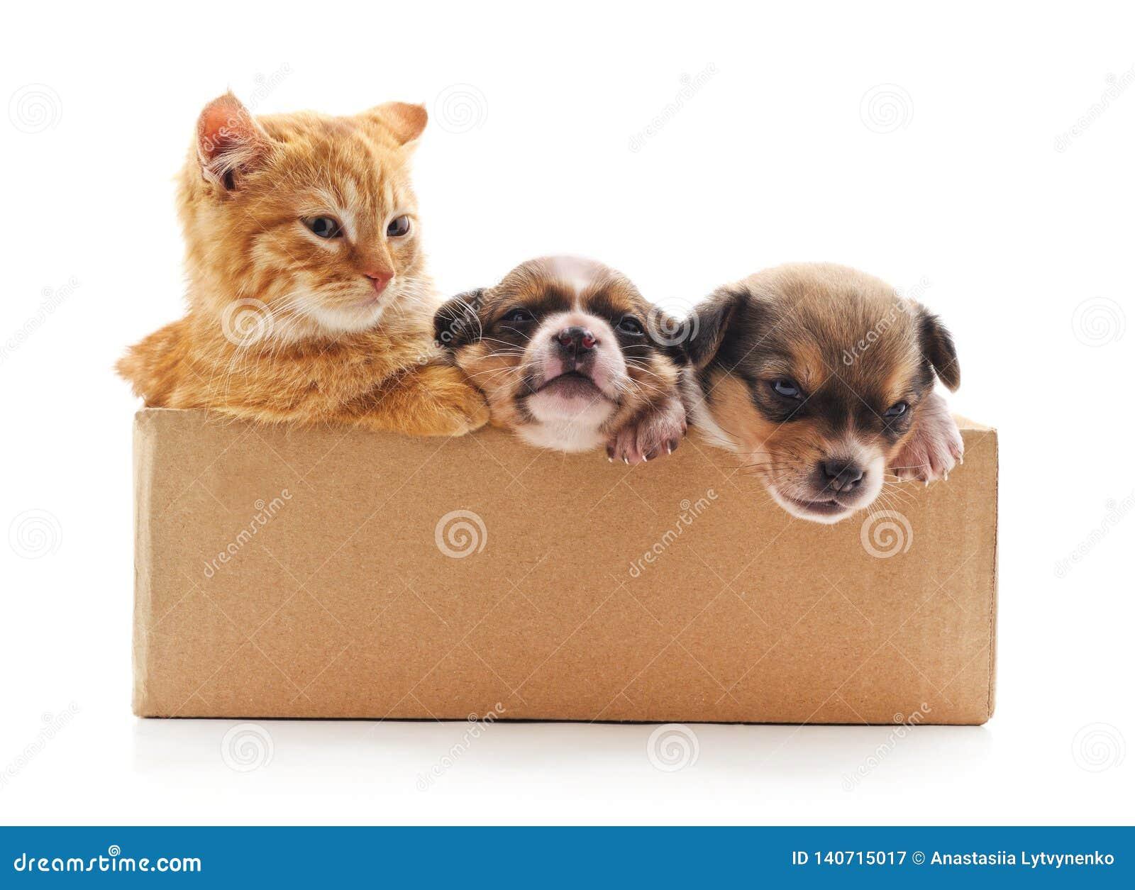 Kattunge och valpar i asken