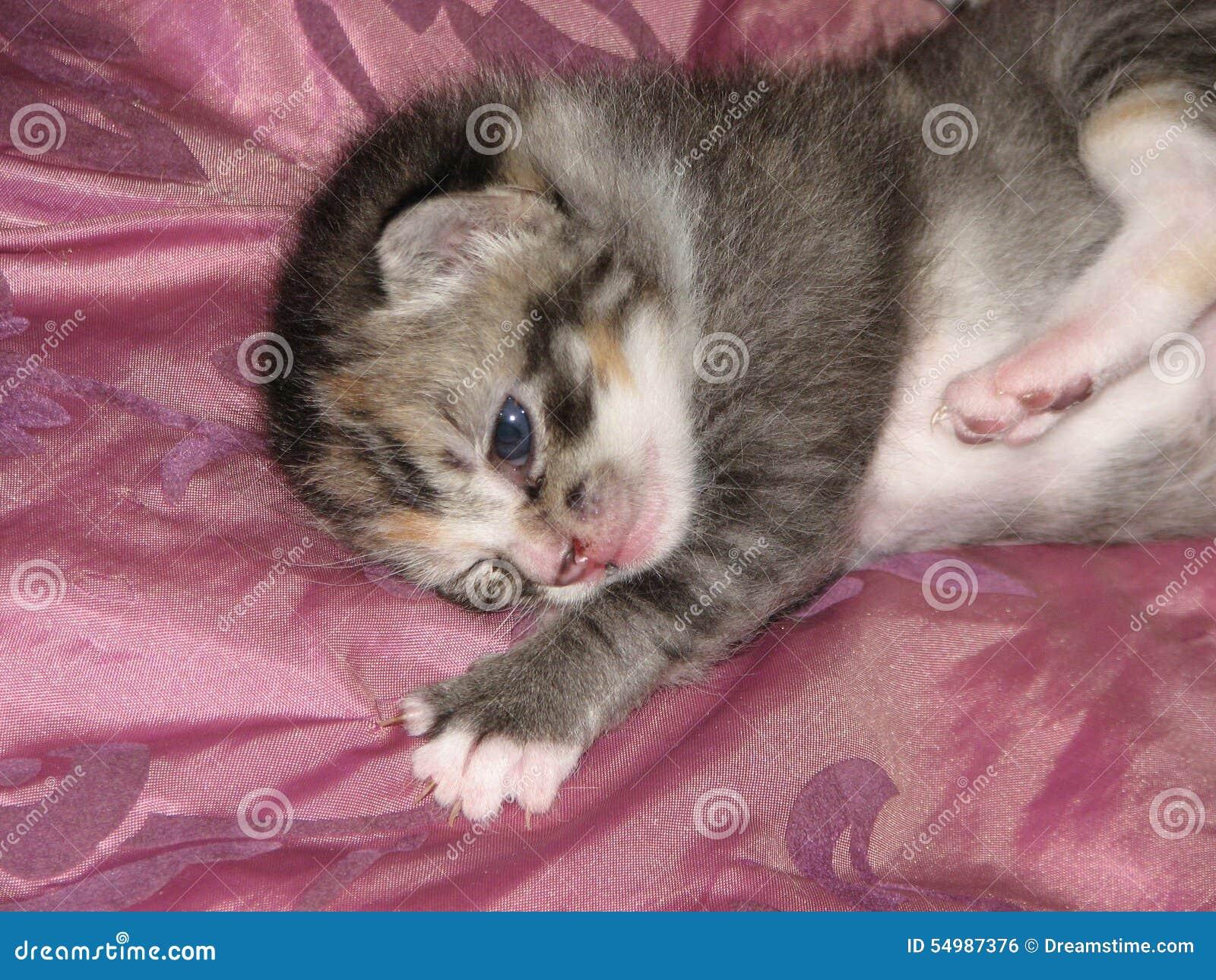 Kattunge på satäng
