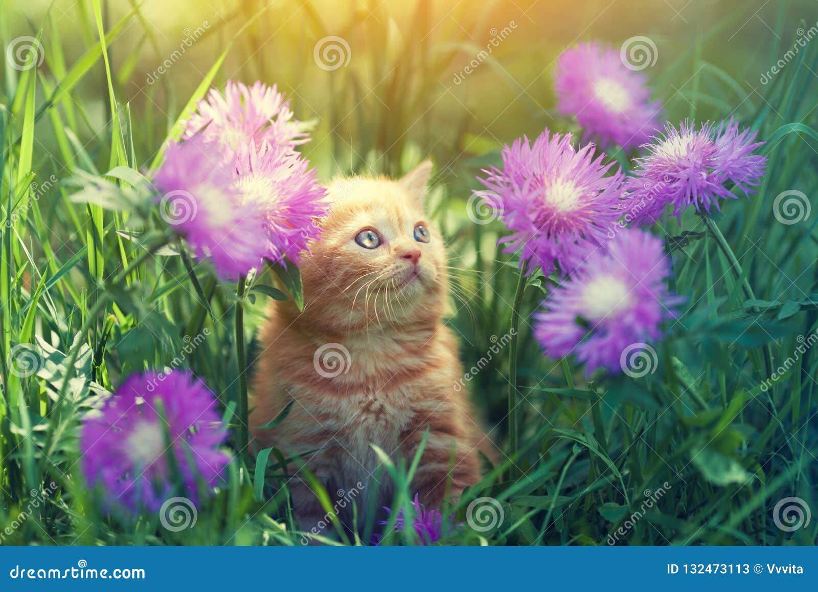 Kattungen går på den blom- gräsmattan