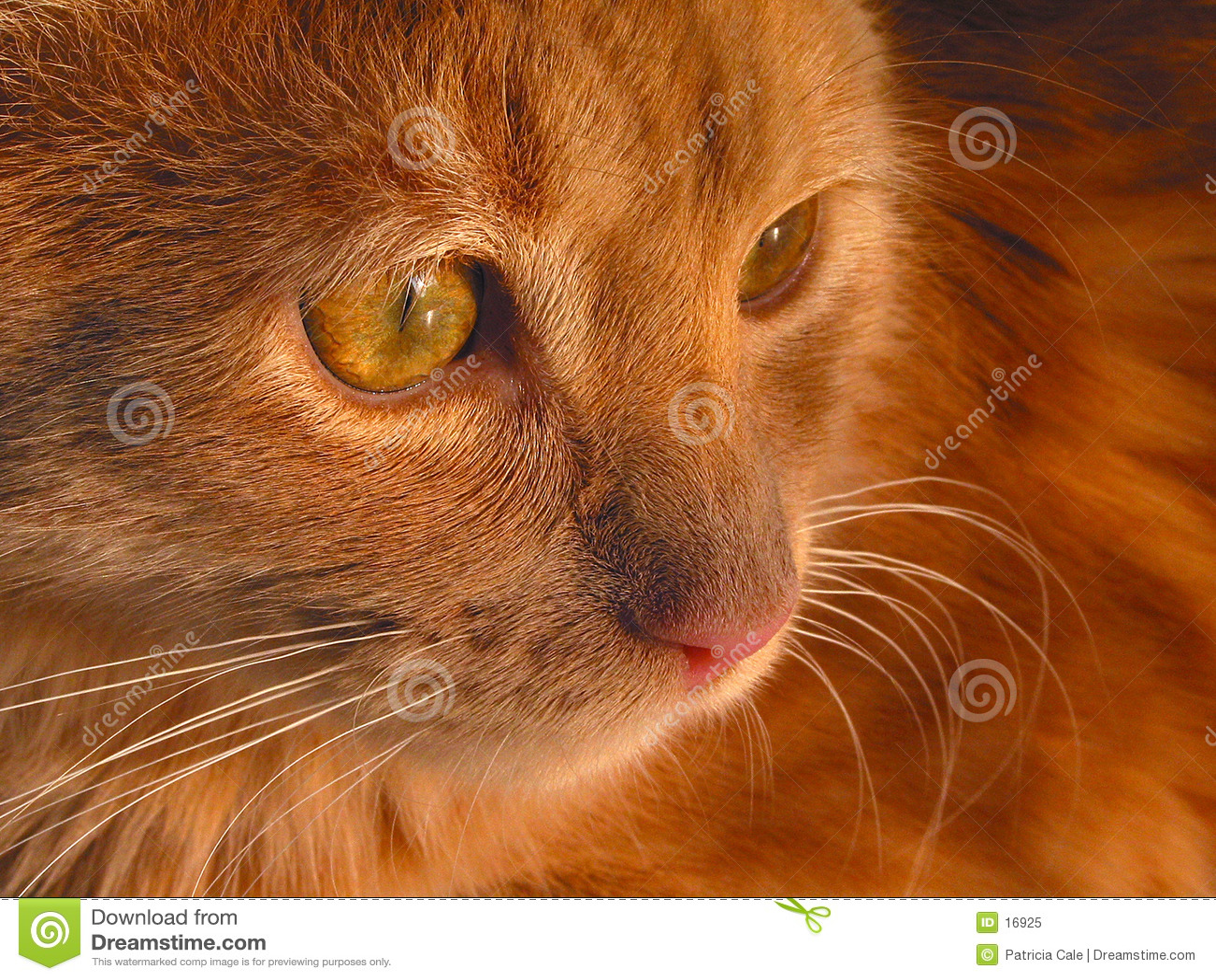 Kattungequiet