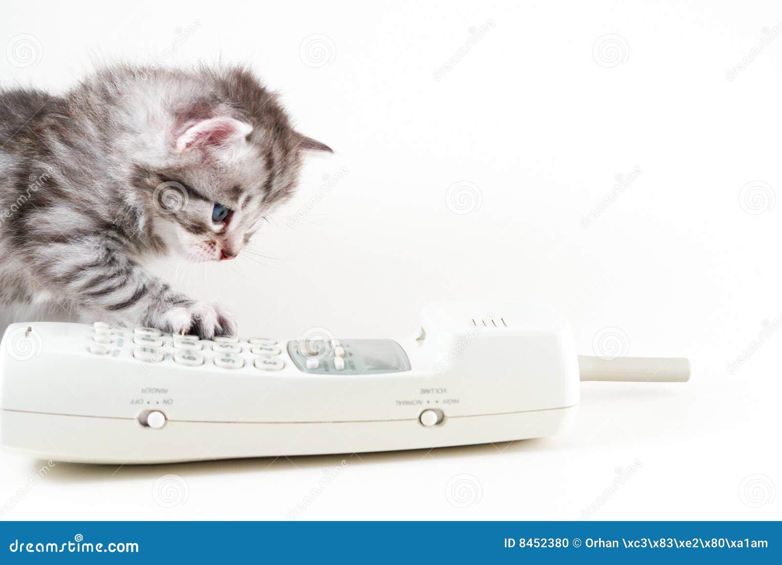 Kattungetelefonradio