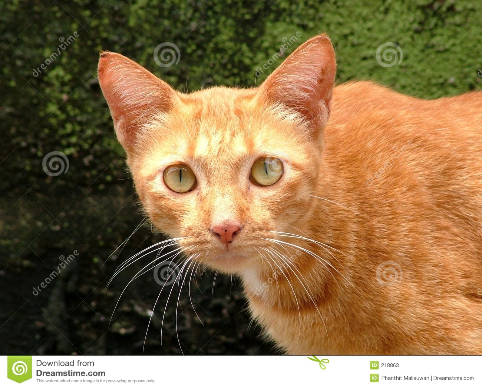 Kattyellow