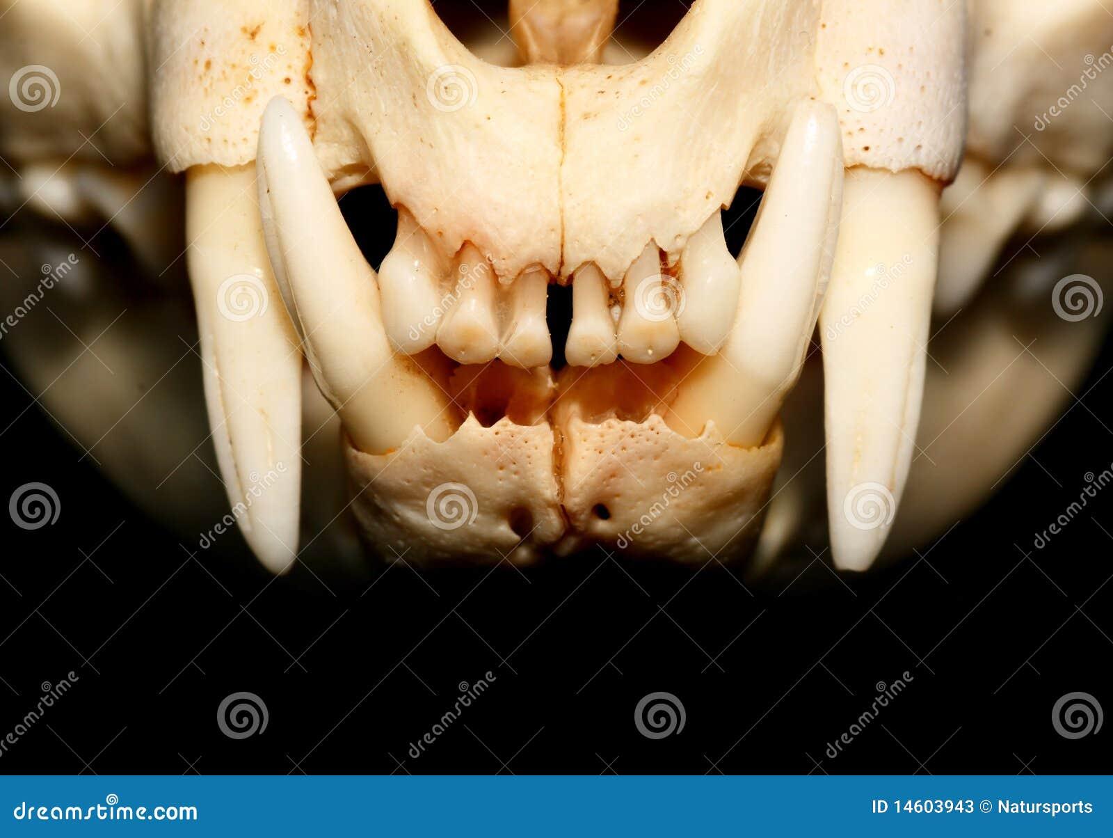 Ziemlich Zahn Anatomie Und Physiologie Bilder - Anatomie Von ...