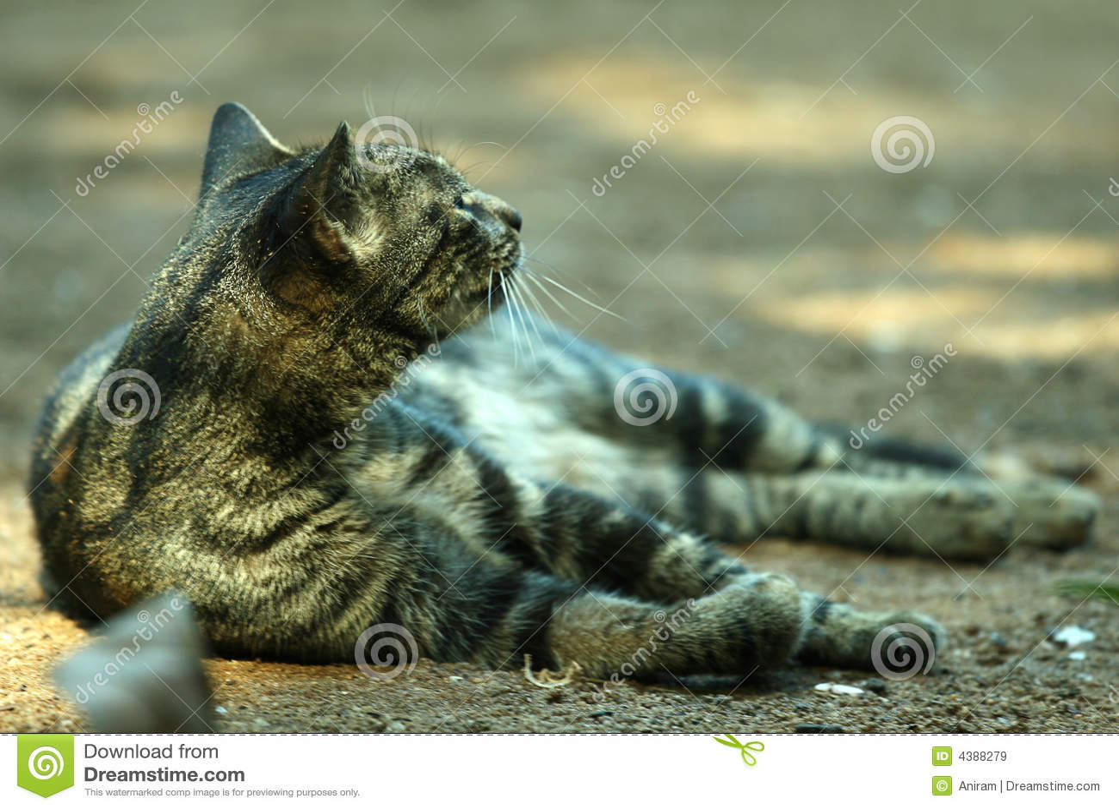 Katze auf dem Sand