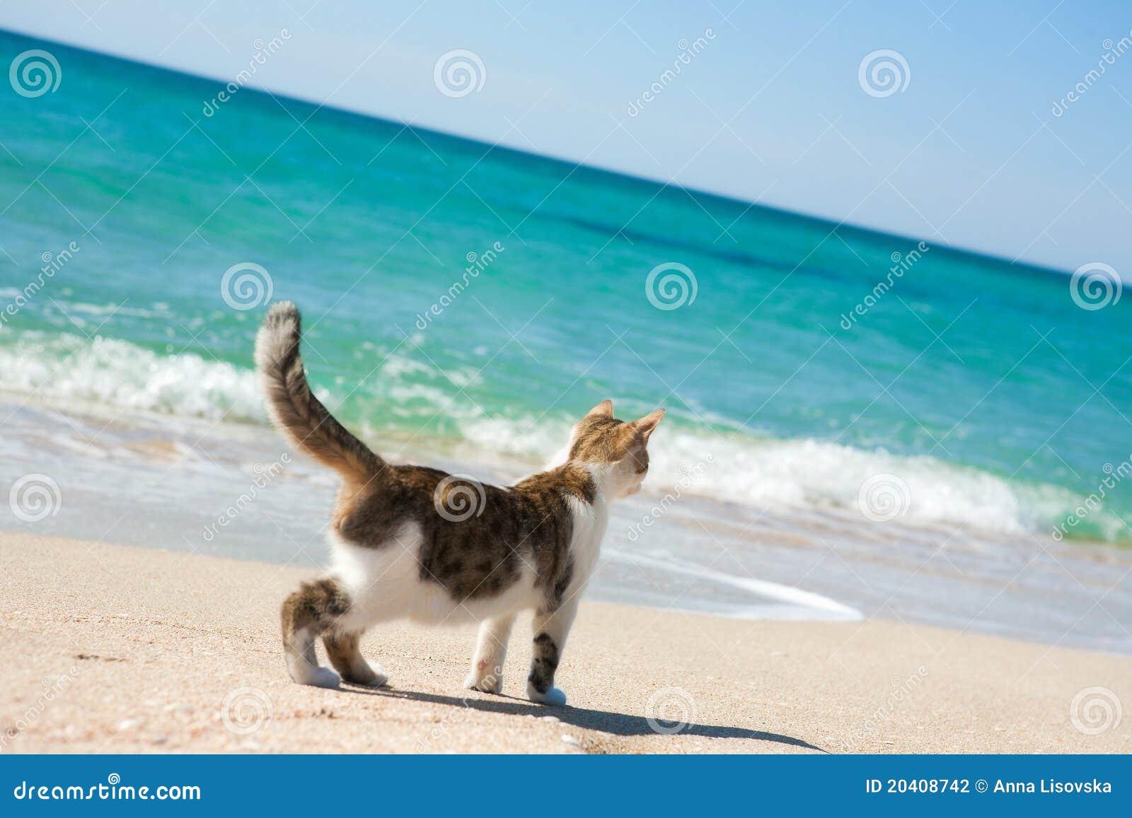 Beach Cats Com