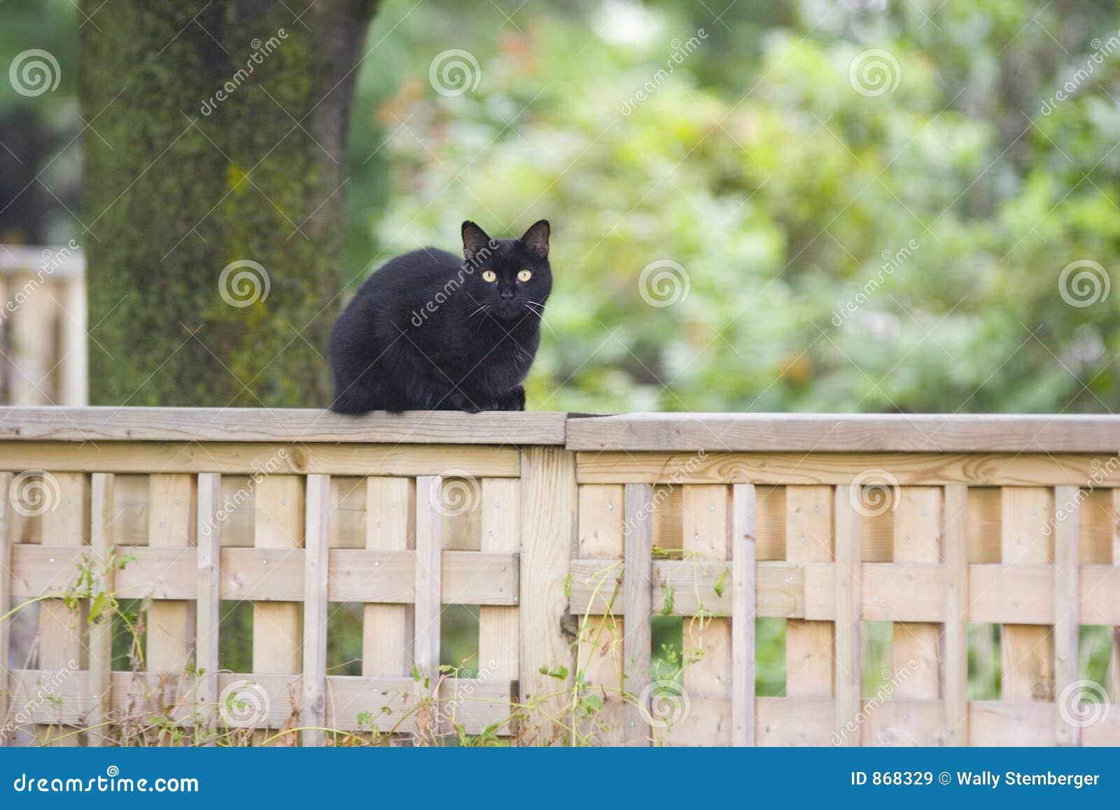 Katze Auf Einem Zaun Stockbild Bild Von Klein Tier Zaun 868329