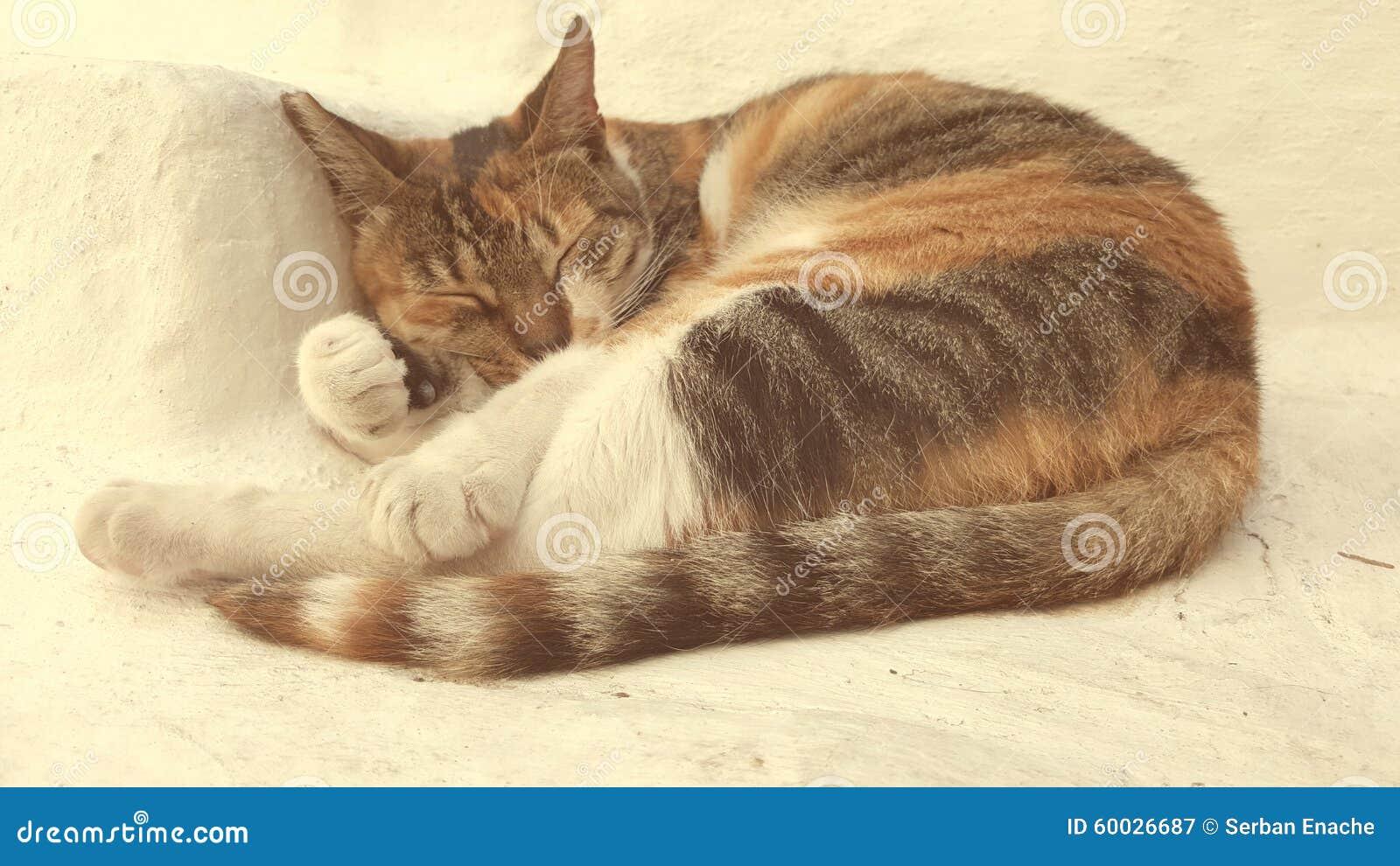 Katze auf griechischer Insel von den Kykladen