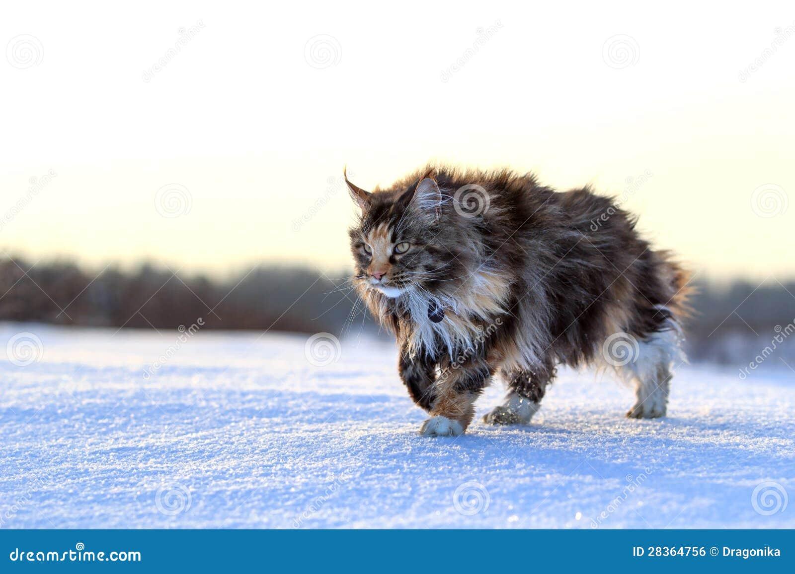 katze auf schnee stockfoto bild von schnee field kitten. Black Bedroom Furniture Sets. Home Design Ideas