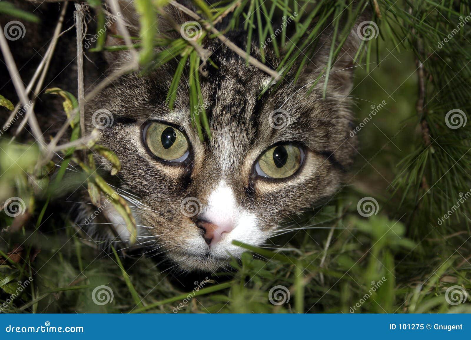 Katze in den Büschen