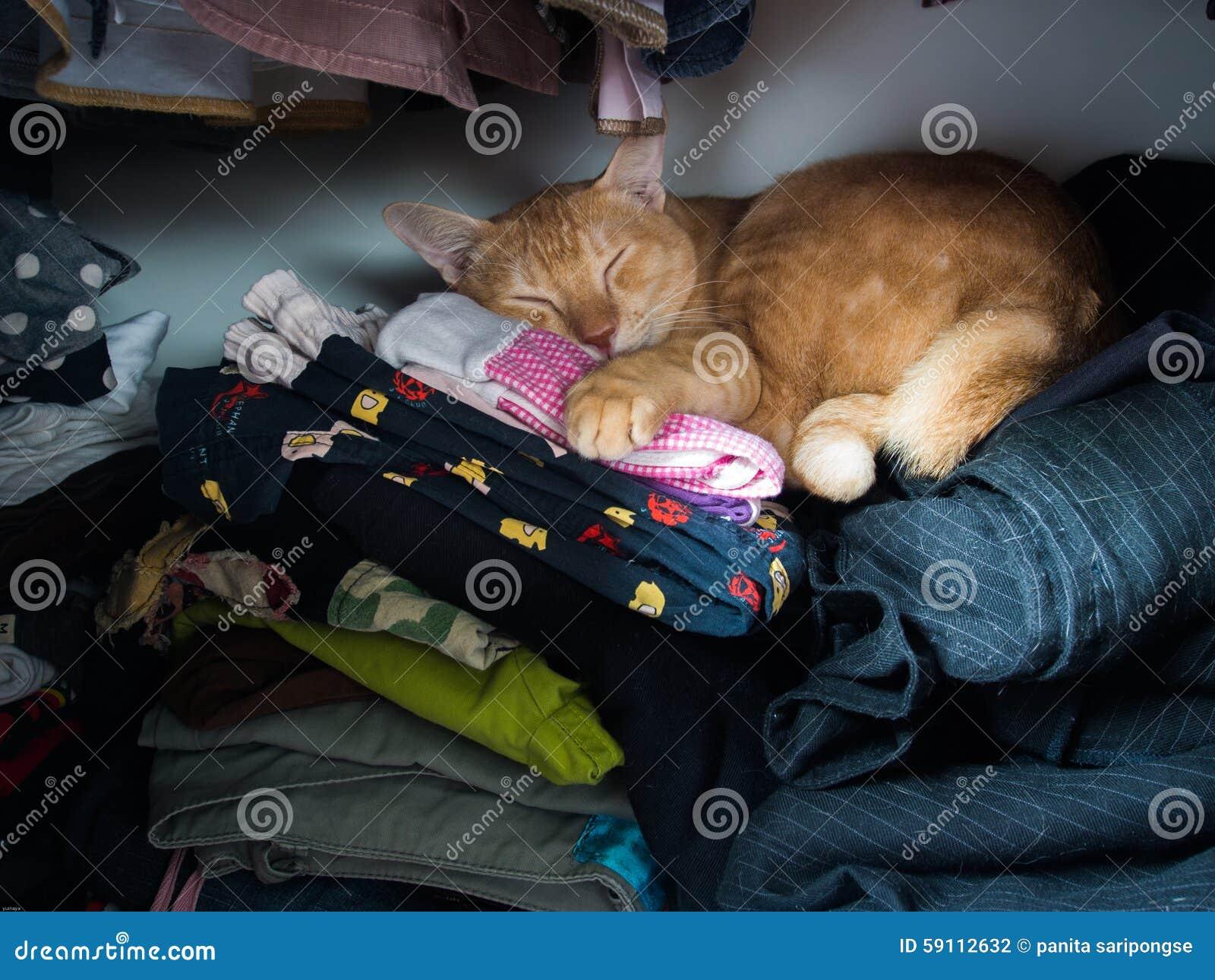 Katze in der garderobe stockfoto bild 59112632 for Garderobe versteckt