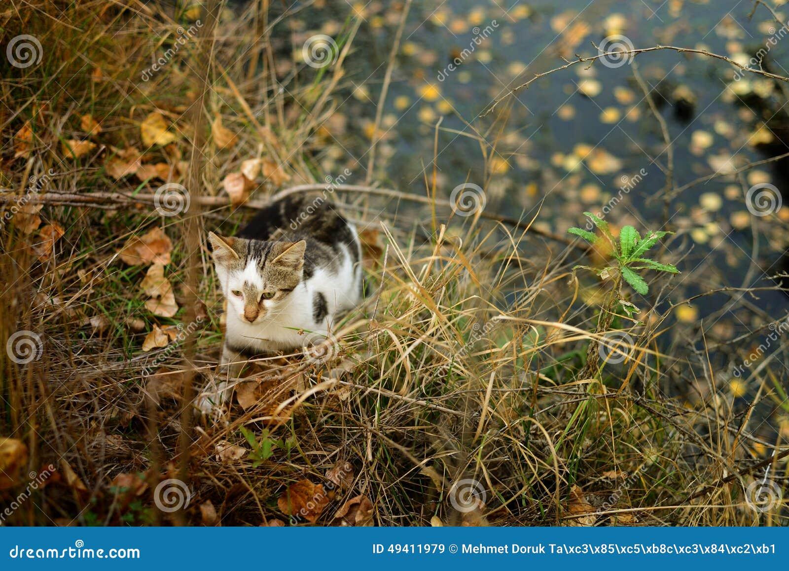 Download Katze in der Natur stockbild. Bild von frau, abschluß - 49411979