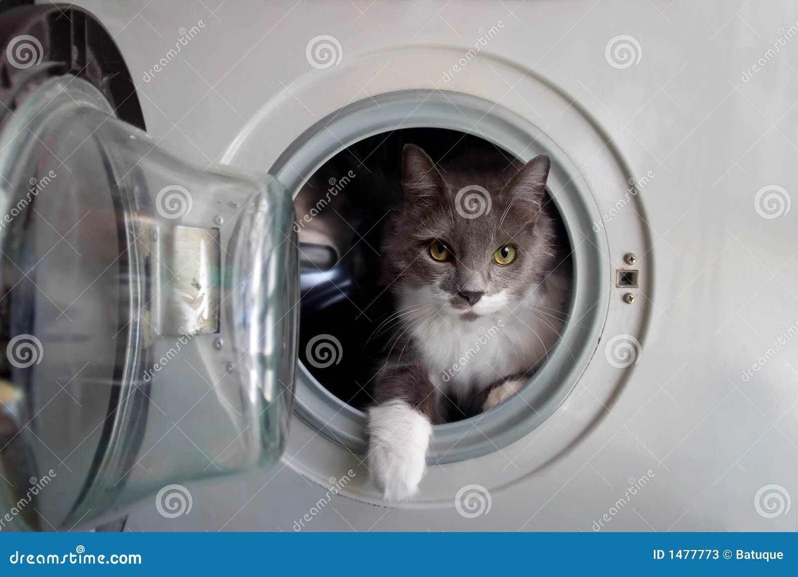 Katze Waschmaschine