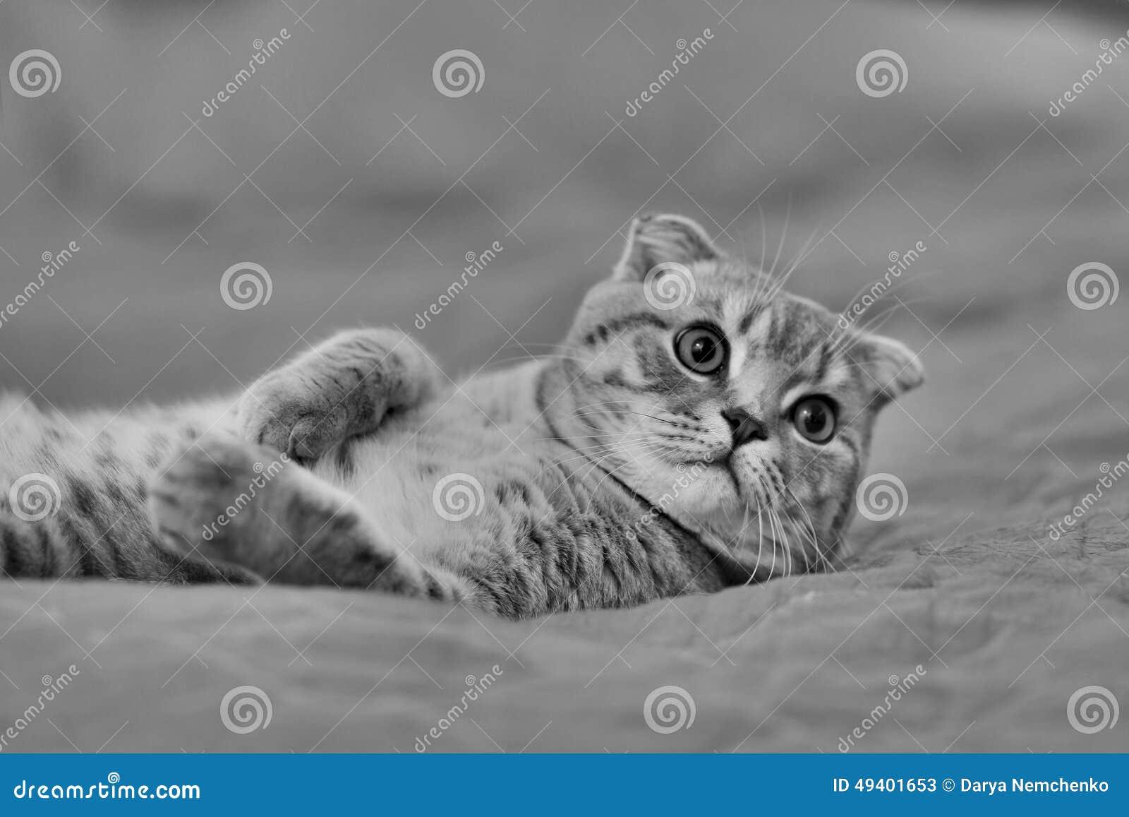 Download Katze, Die Auf Dem Bett Stillsteht Stockbild - Bild von kittens, rückseite: 49401653