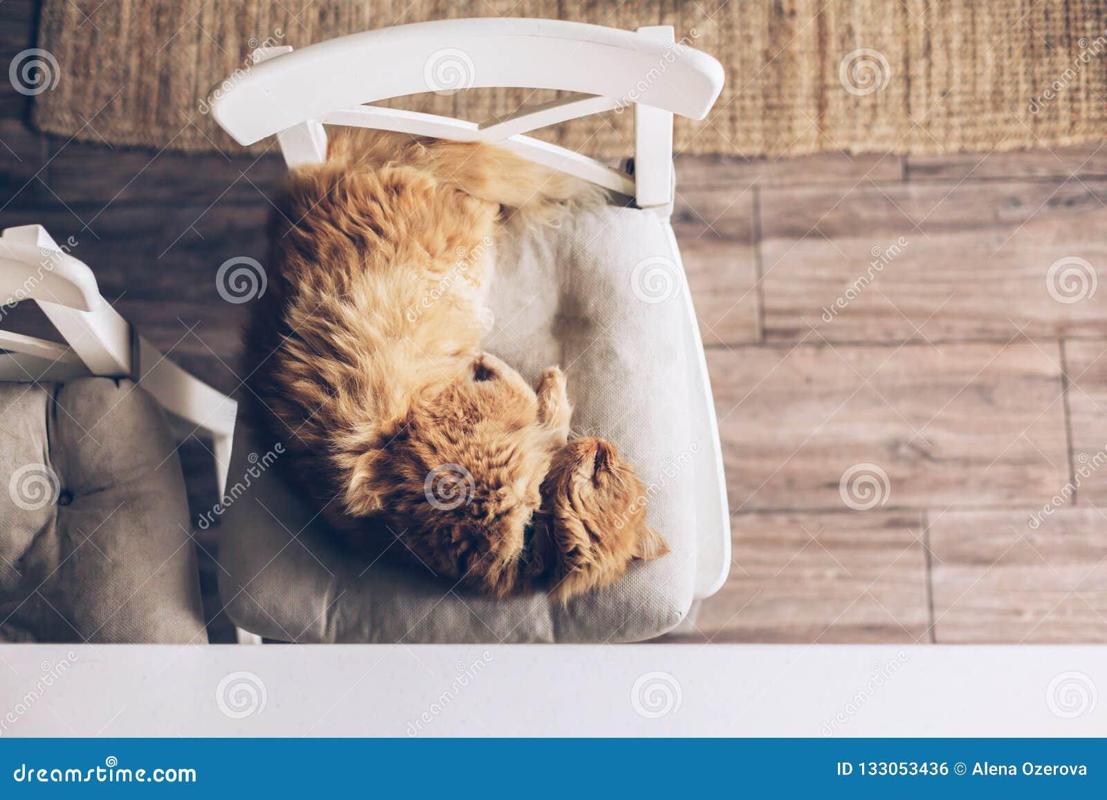 Katze, die auf einem Stuhl schläft