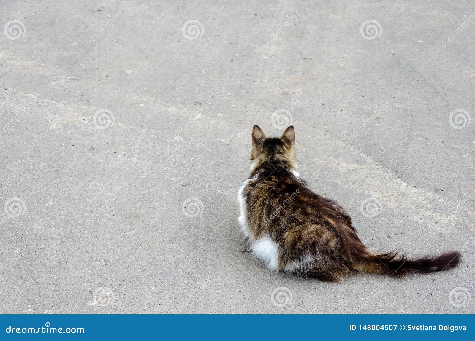 Katze, die am Boden geht Kopieren Sie Platz