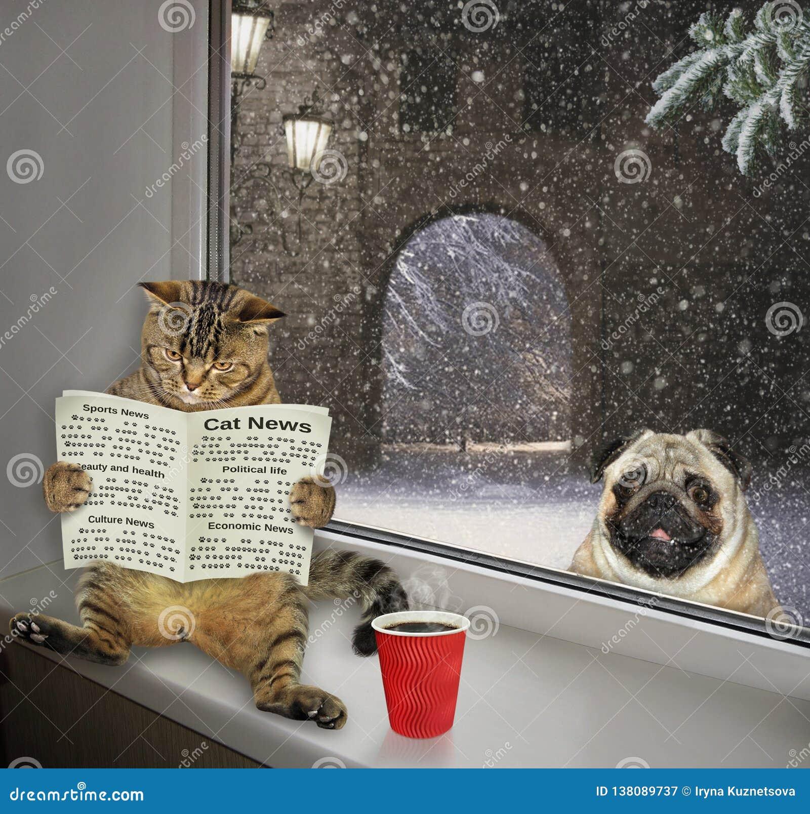 Katze, die eine Zeitung auf der Schwelle 3 liest