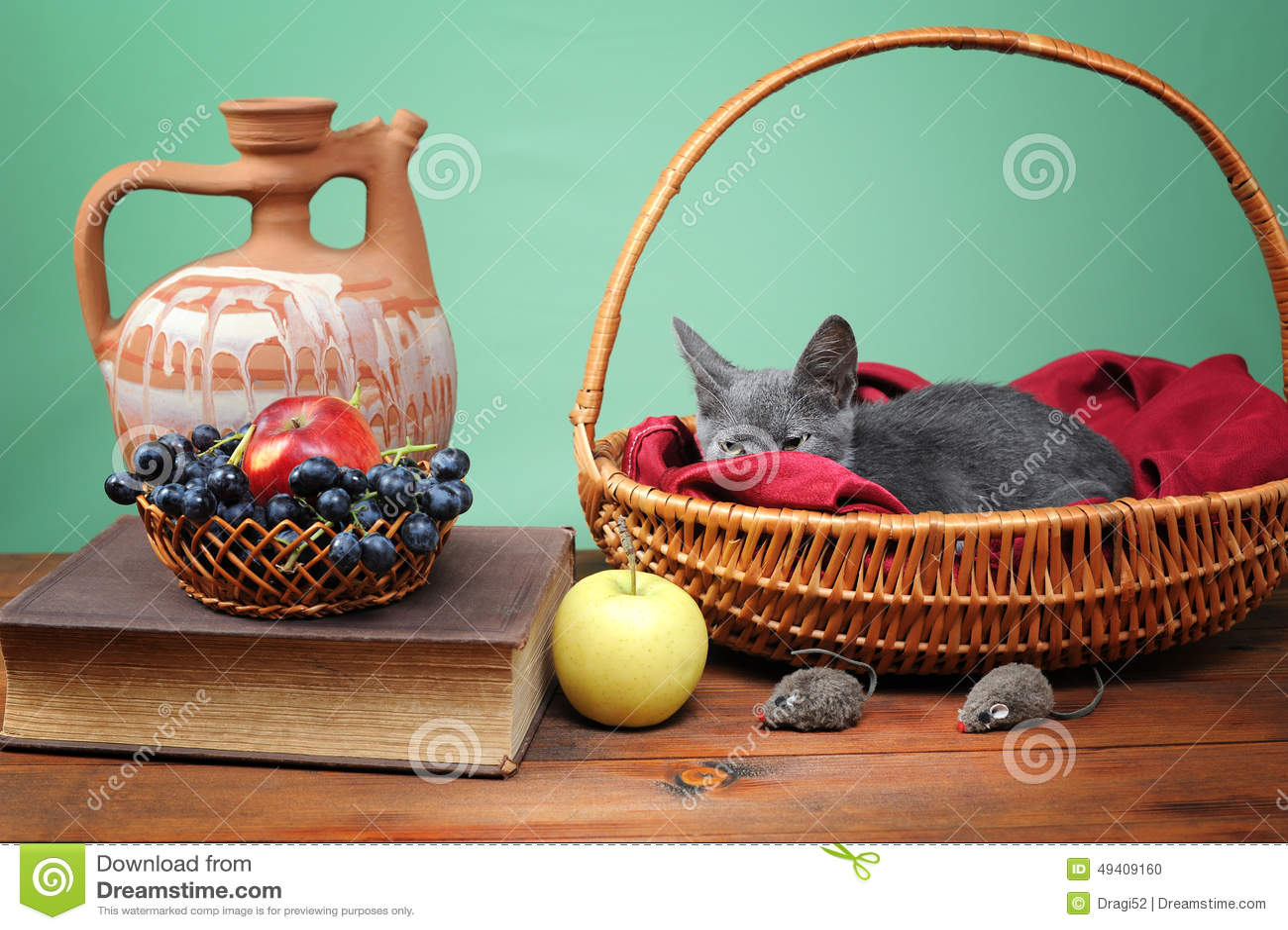 Download Katze, Die In Einem Weidenkorb Stillsteht Stockfoto - Bild von leben, bezaubern: 49409160