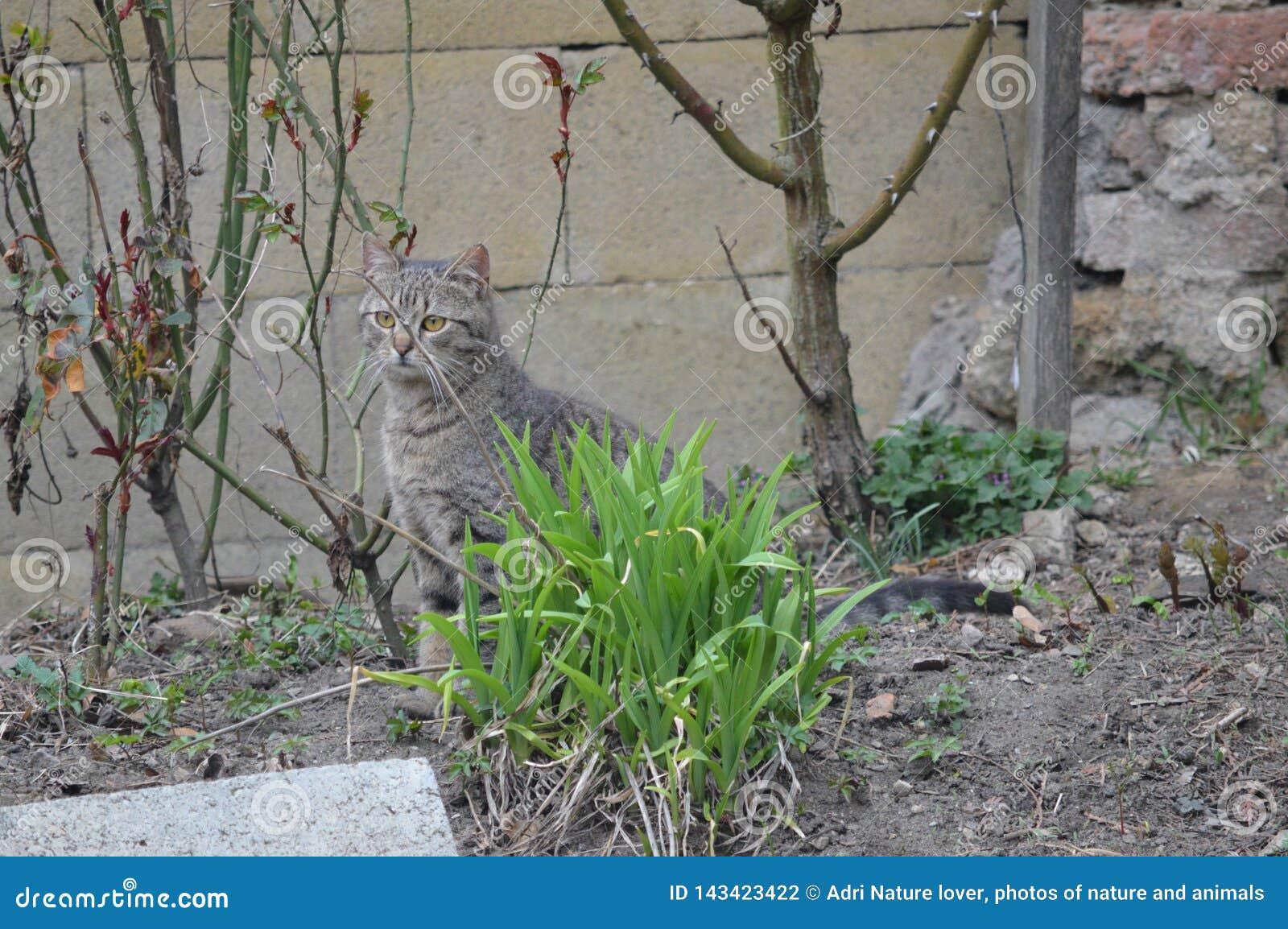 Katze, die im Garten sitzt